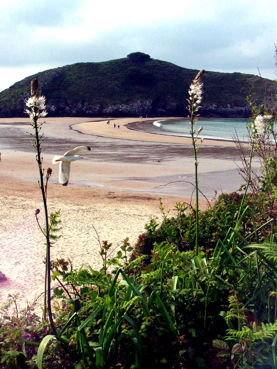 Foto playa Barro. Gaviota, Playa de Barro, LLanes, Asturias, España