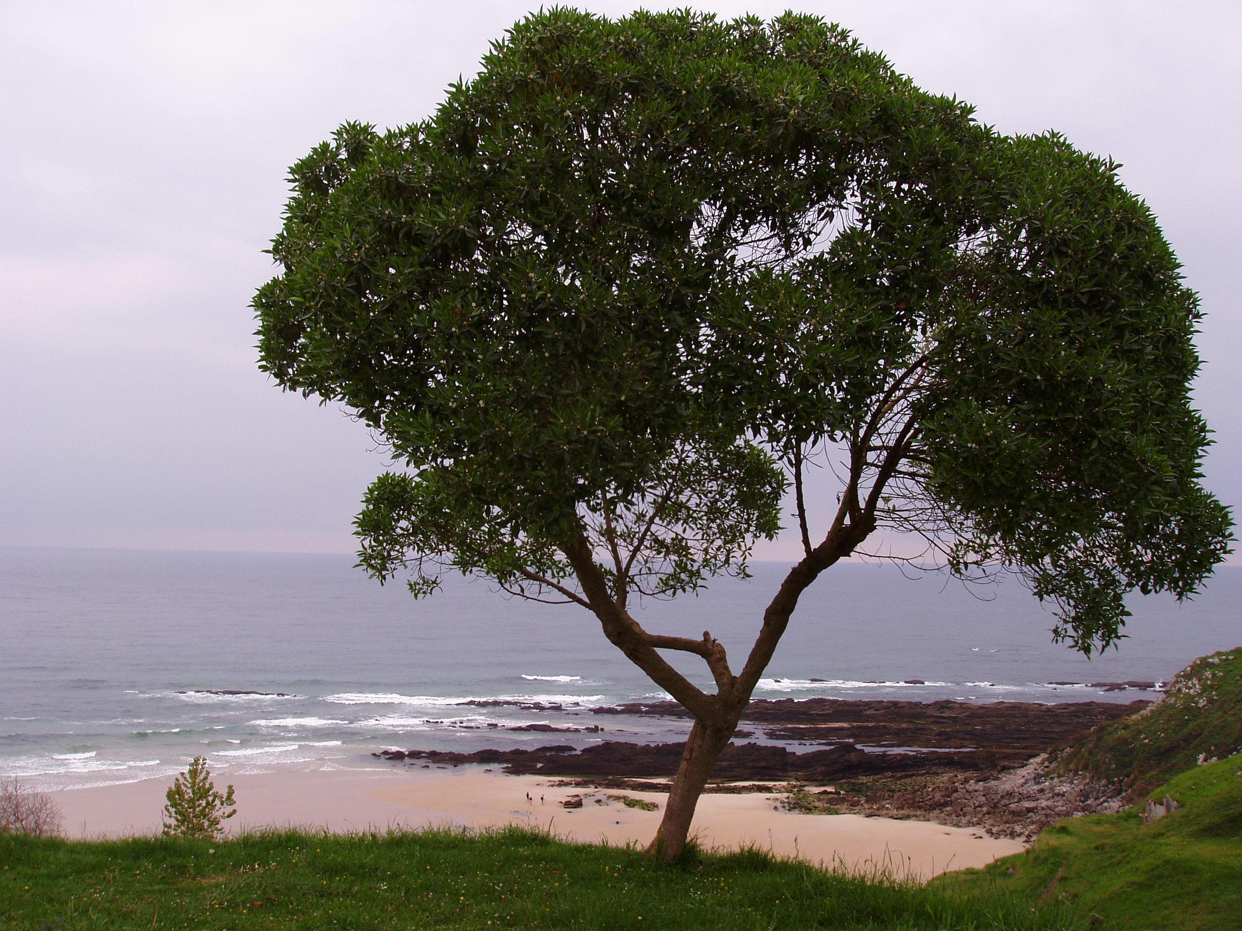 Foto playa Vidiago / Novales / Bretones. Hope tree 2006
