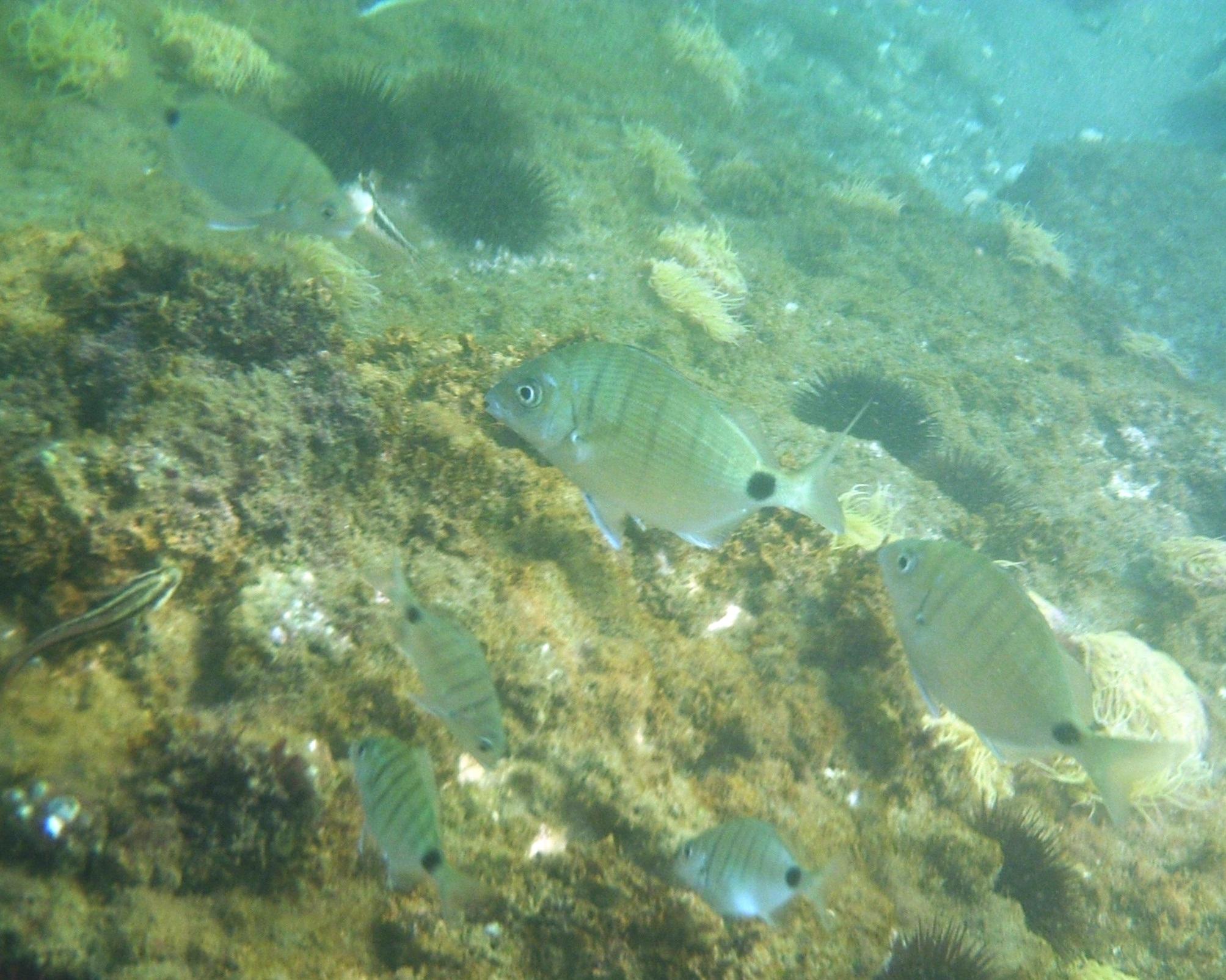 Foto playa Las Yucas. Bajo el mar (Doradas)