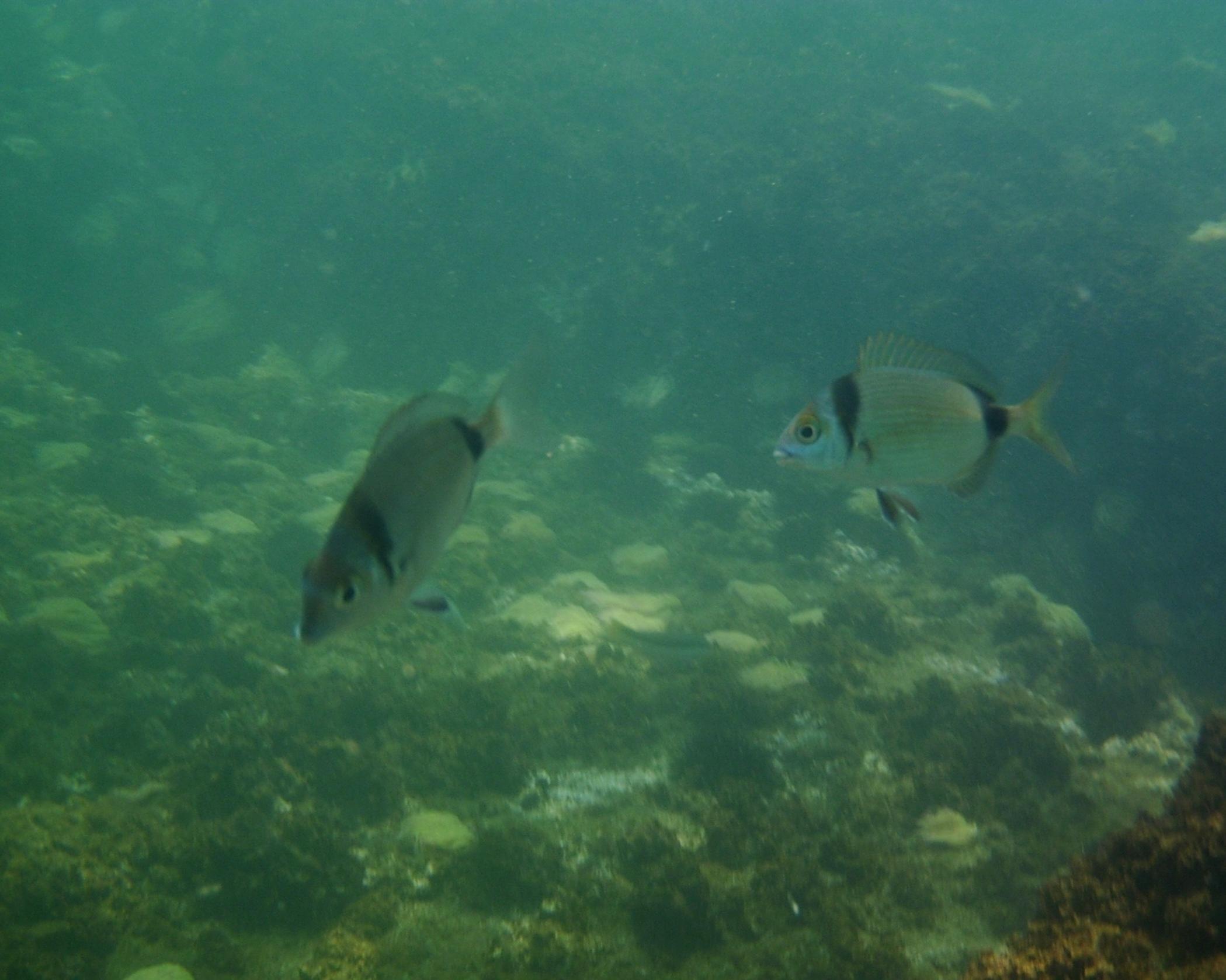 Foto playa Las Yucas. Bajo el mar (Salgos)