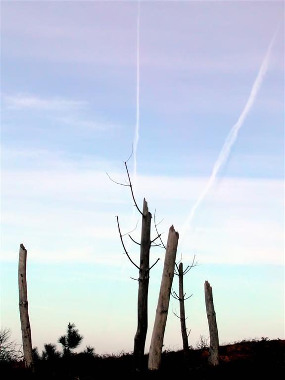 Foto playa Los Frailes / Asturiaga / El Fraile. Bosque muerto Liencres, Santander