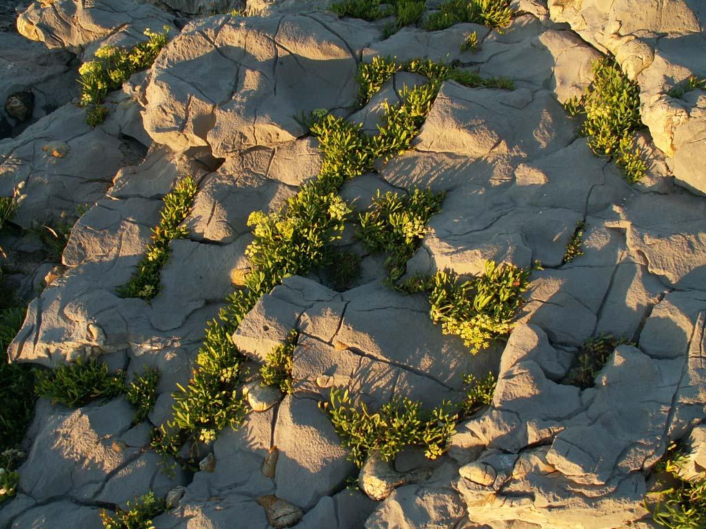 Foto playa El Berrón. Fels bei Sonabia