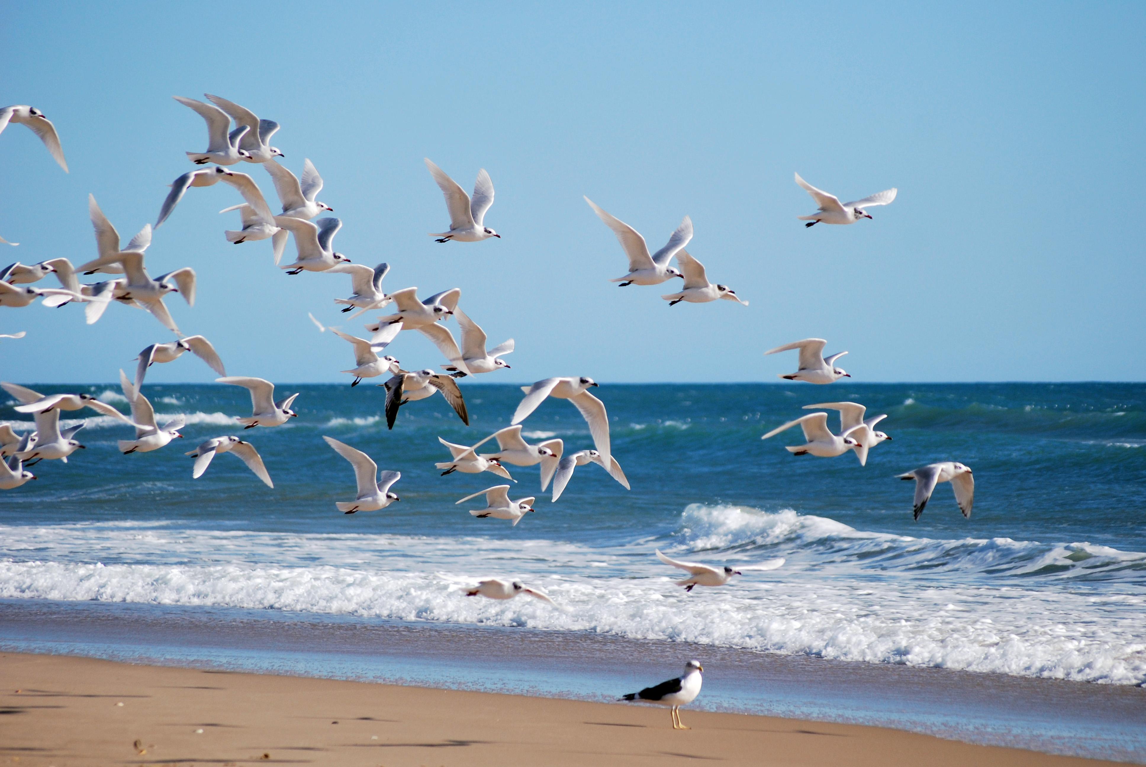 Playa Platja Llarga / Platja de Roda de Barà