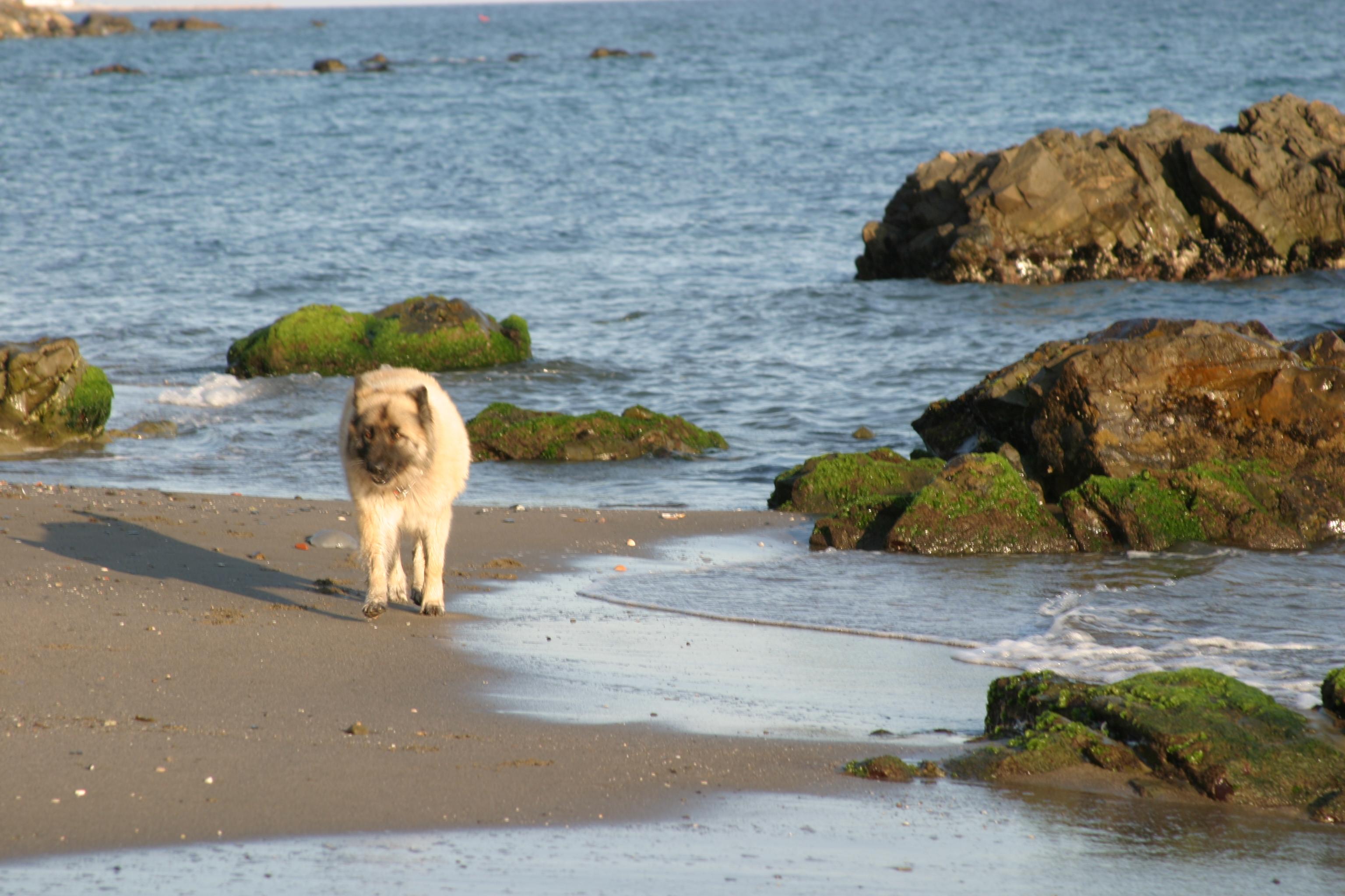 Foto playa Carvajal. Nara en la Playa