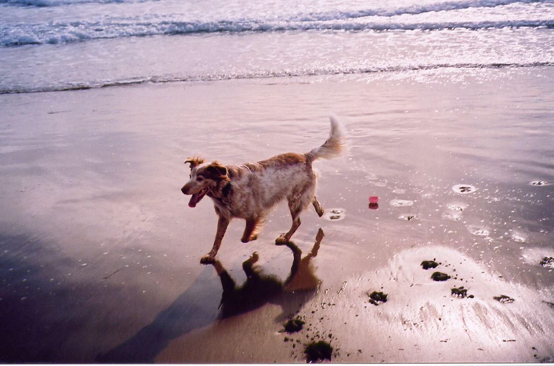 Foto playa La Llarga / La Larga. Can a la Platja Llarga