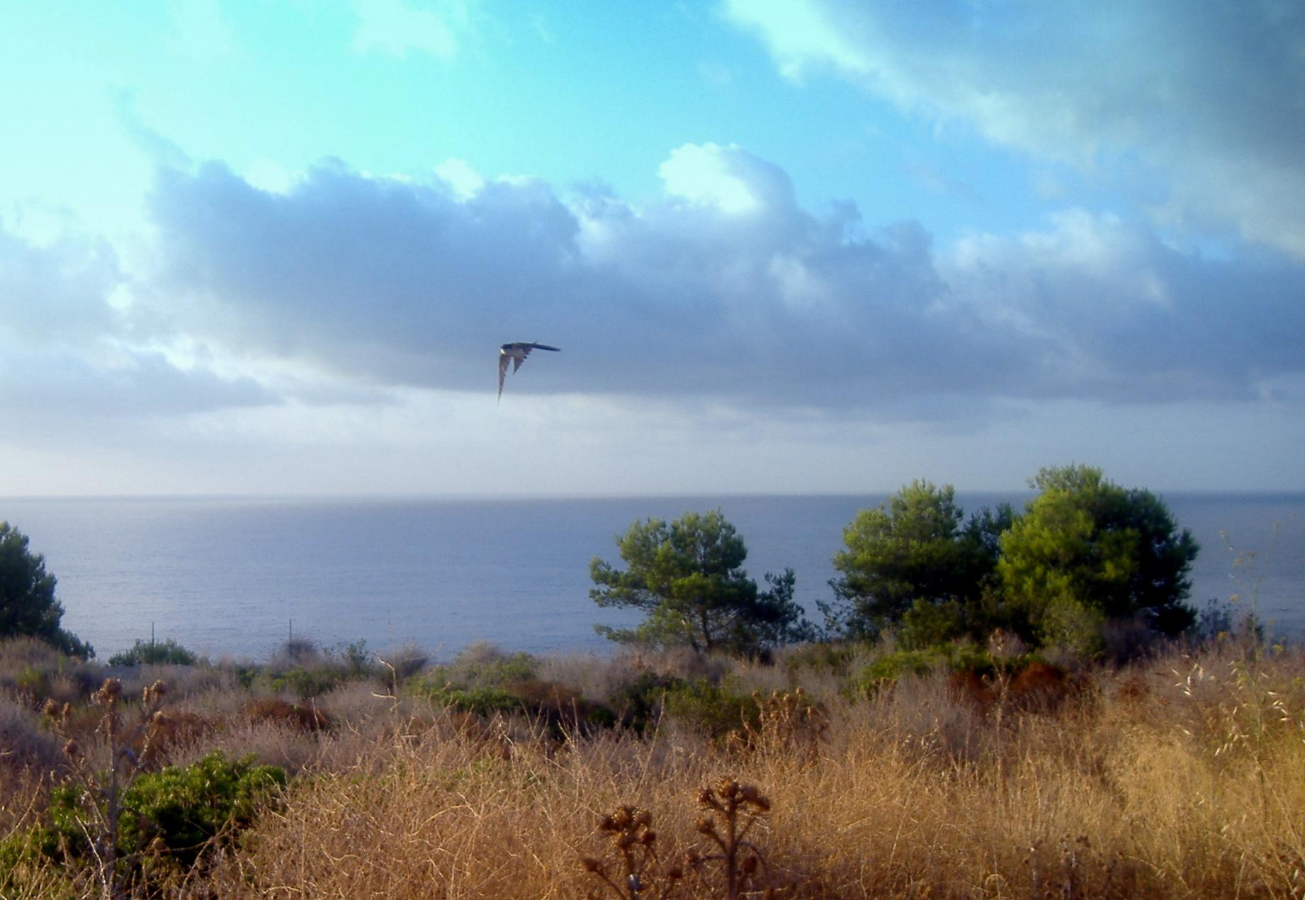 Foto playa El Reguerot de Claveguer. Cree, insiste, se valiente, clama: ¡ _estoy aquí_ !