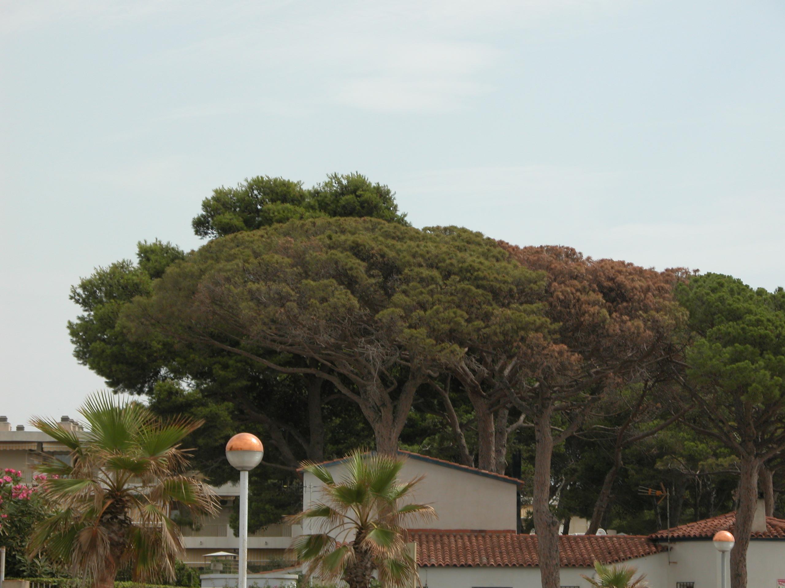 Foto playa Cap de Sant Pere. Vilafortuny - deptak przy plaży - by Robi