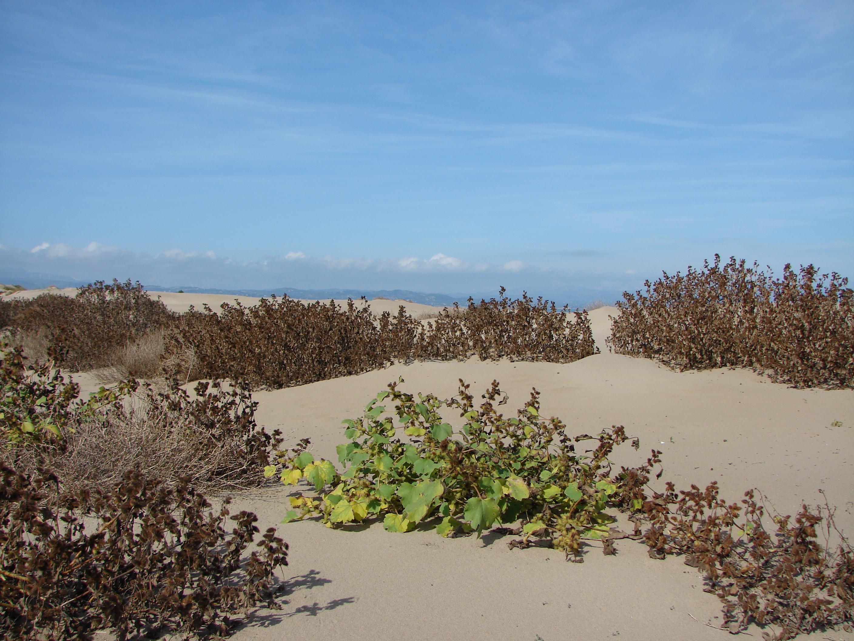 Foto playa La Marquesa. Dunas en el Fangal.