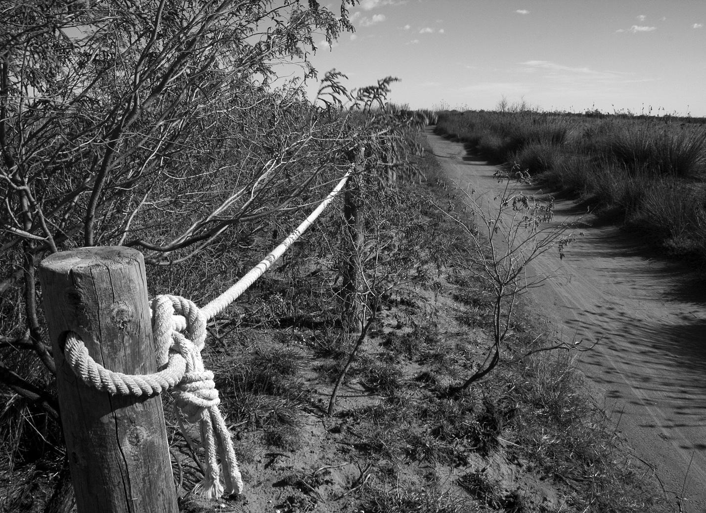 Foto playa Los Eucaliptos. Delta del Ebro.Vegetación: El poblamiento vegetal del delta del Ebro, por sus peculiares características, es único en el territorio catalán, no tanto por la rareza de sus comunidades como por su potencial cualitativo y cuantitativo (los últimos catá