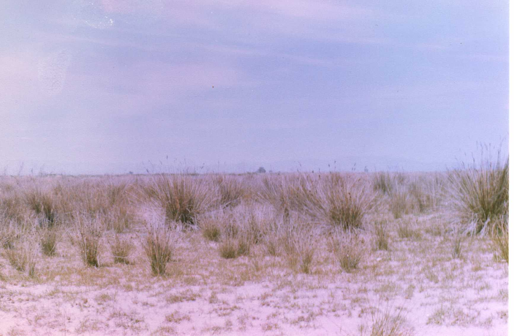 Foto playa Los Eucaliptos. Joncs