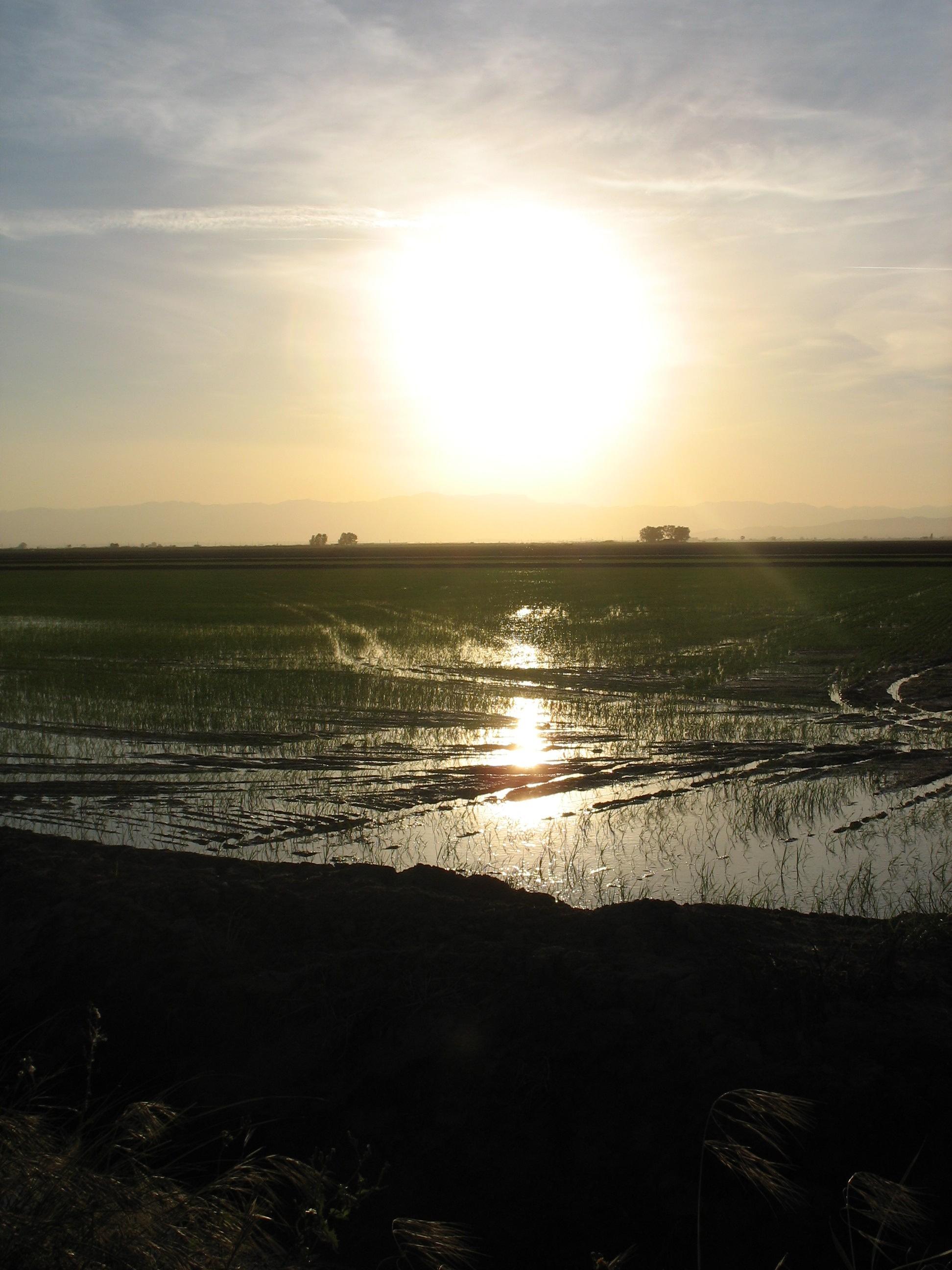 Foto playa Los Eucaliptos. Delta de l´Ebre