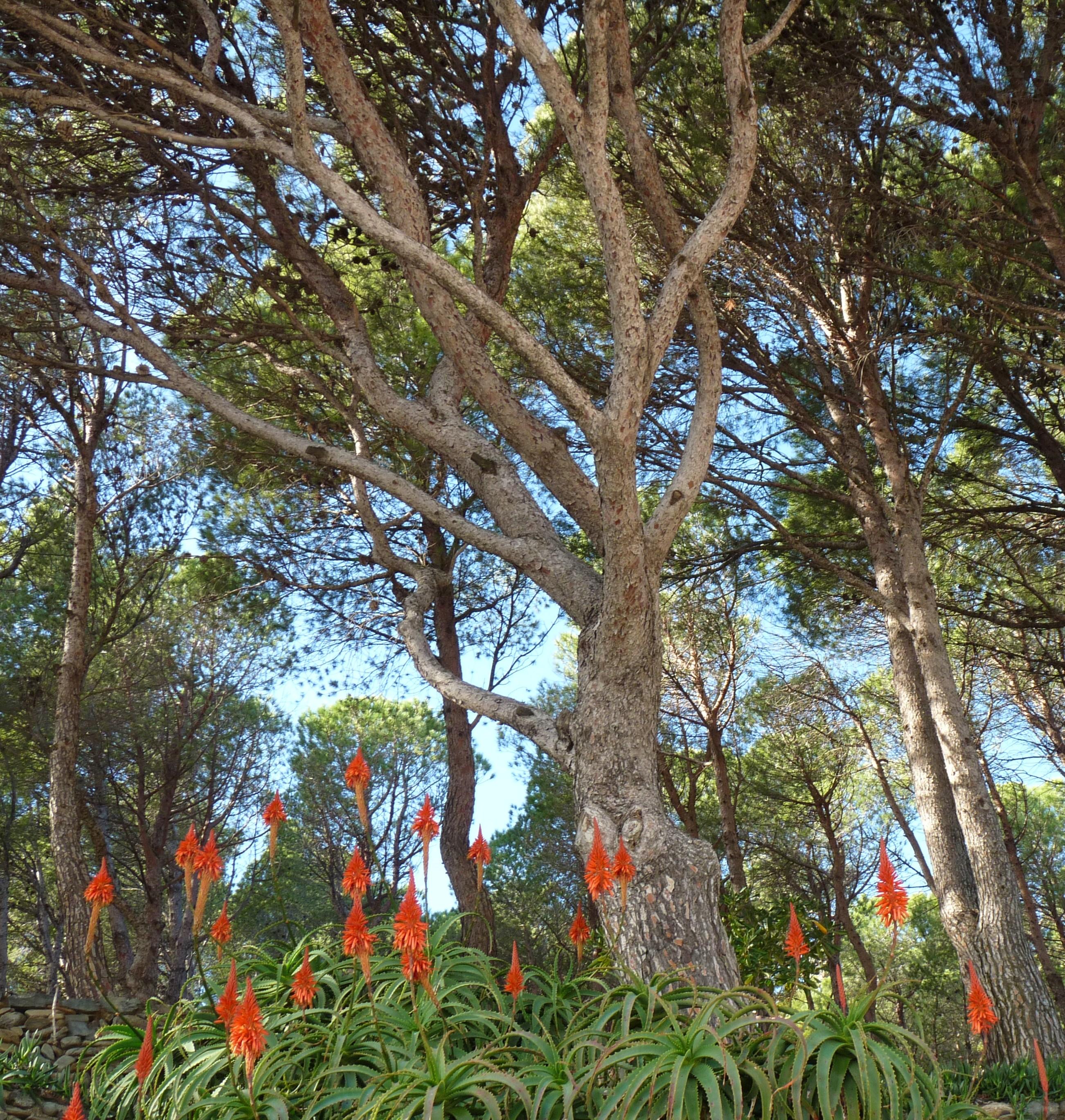 Foto playa Garbet. Grudniowe kwitnienie