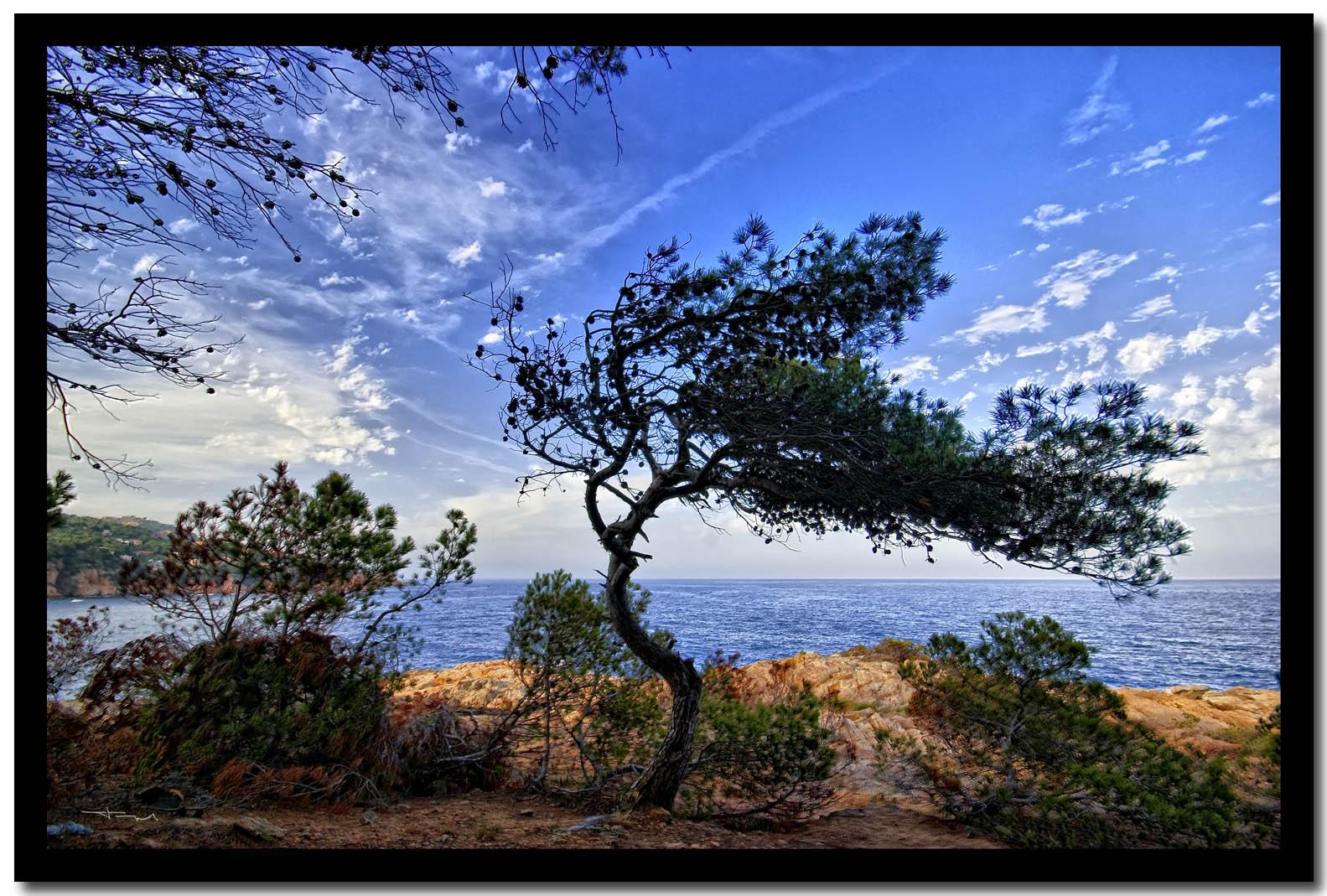 Playa Tamariu