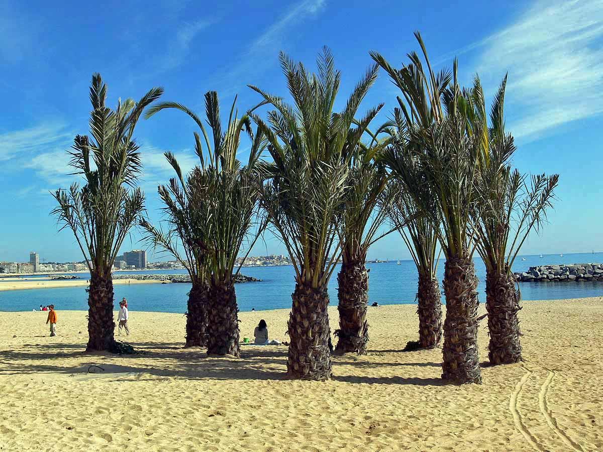 Foto playa Cala de la Roca del Paller. Sant Antoni de Mar