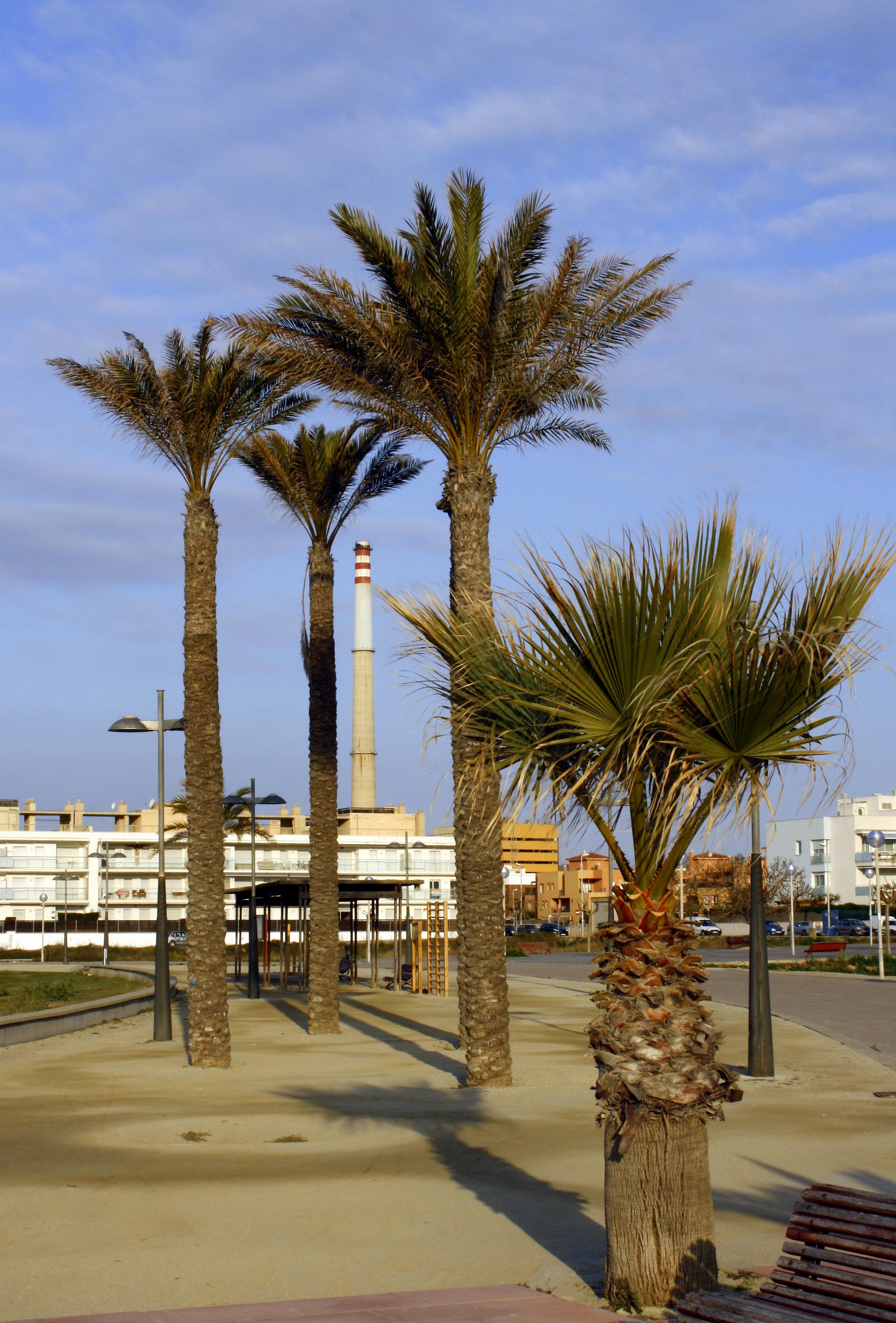Foto playa Mota de Sant Pere. Paseo martítimo