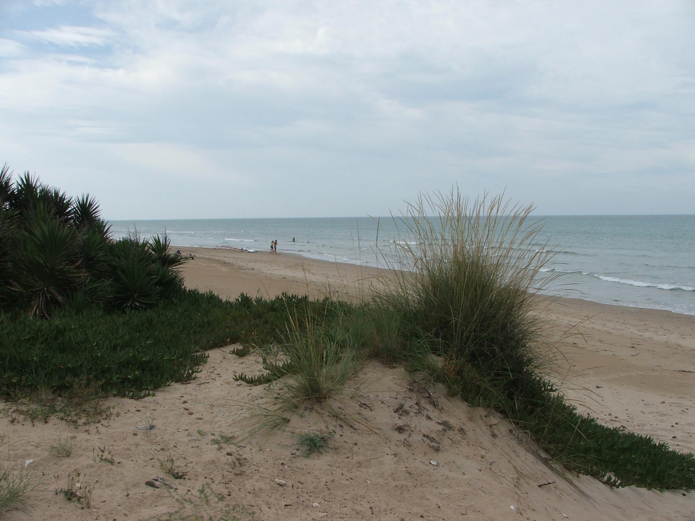 Foto playa Les Devesses / Bassetes. Dunas Protegidas, Les Deveses - Denia