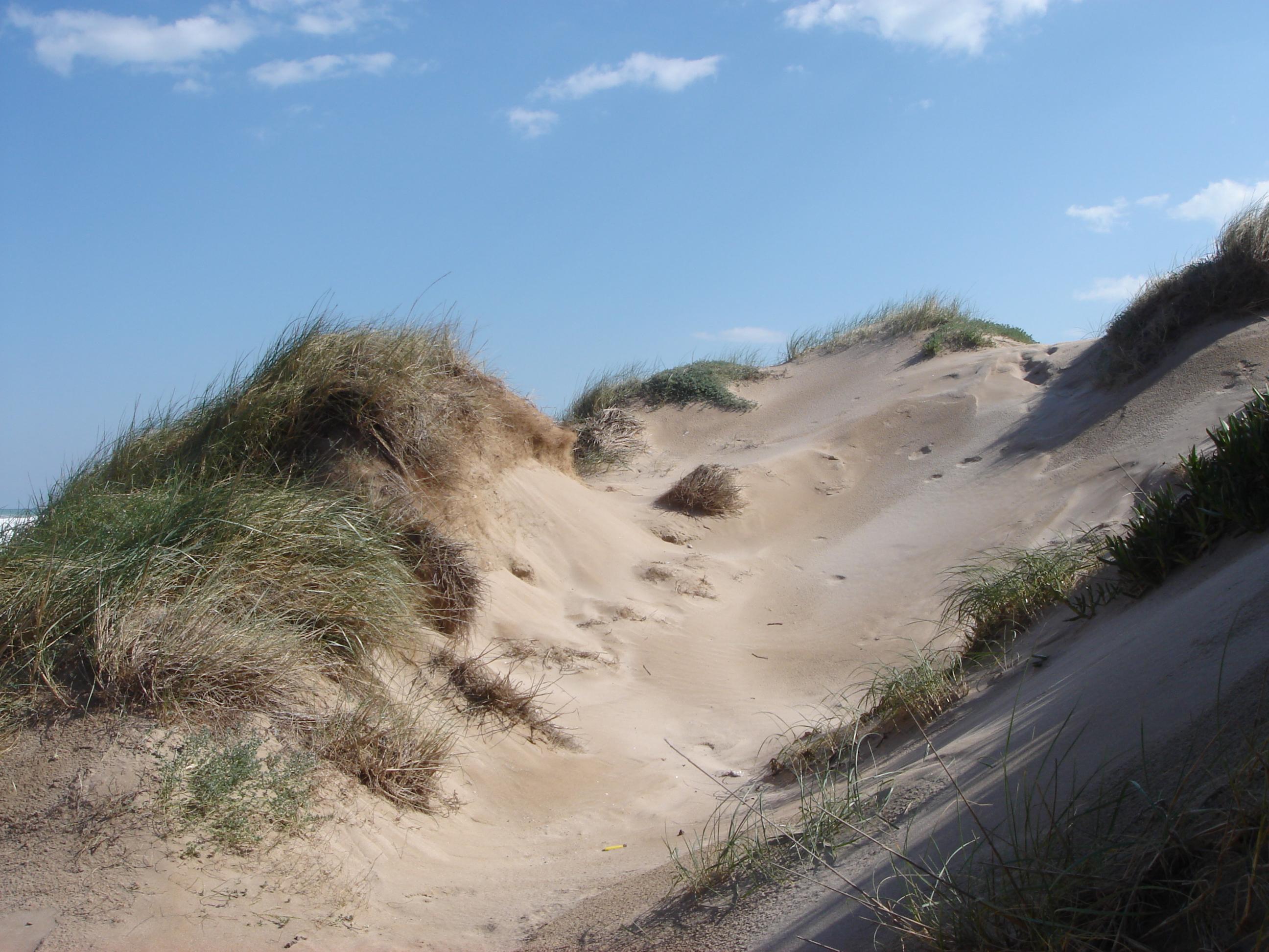 Foto playa Mareny de Sant Llorenç. [ n_lorito ] Dunas en Mareny Blau. Sueca