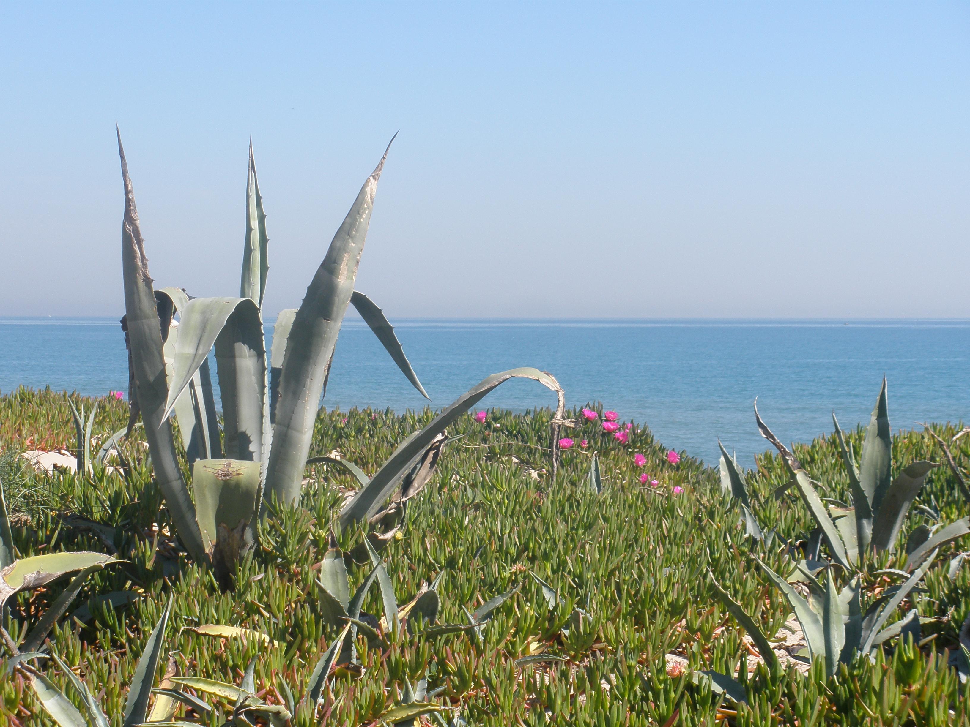 Foto playa Bega de Mar. Mediterrània