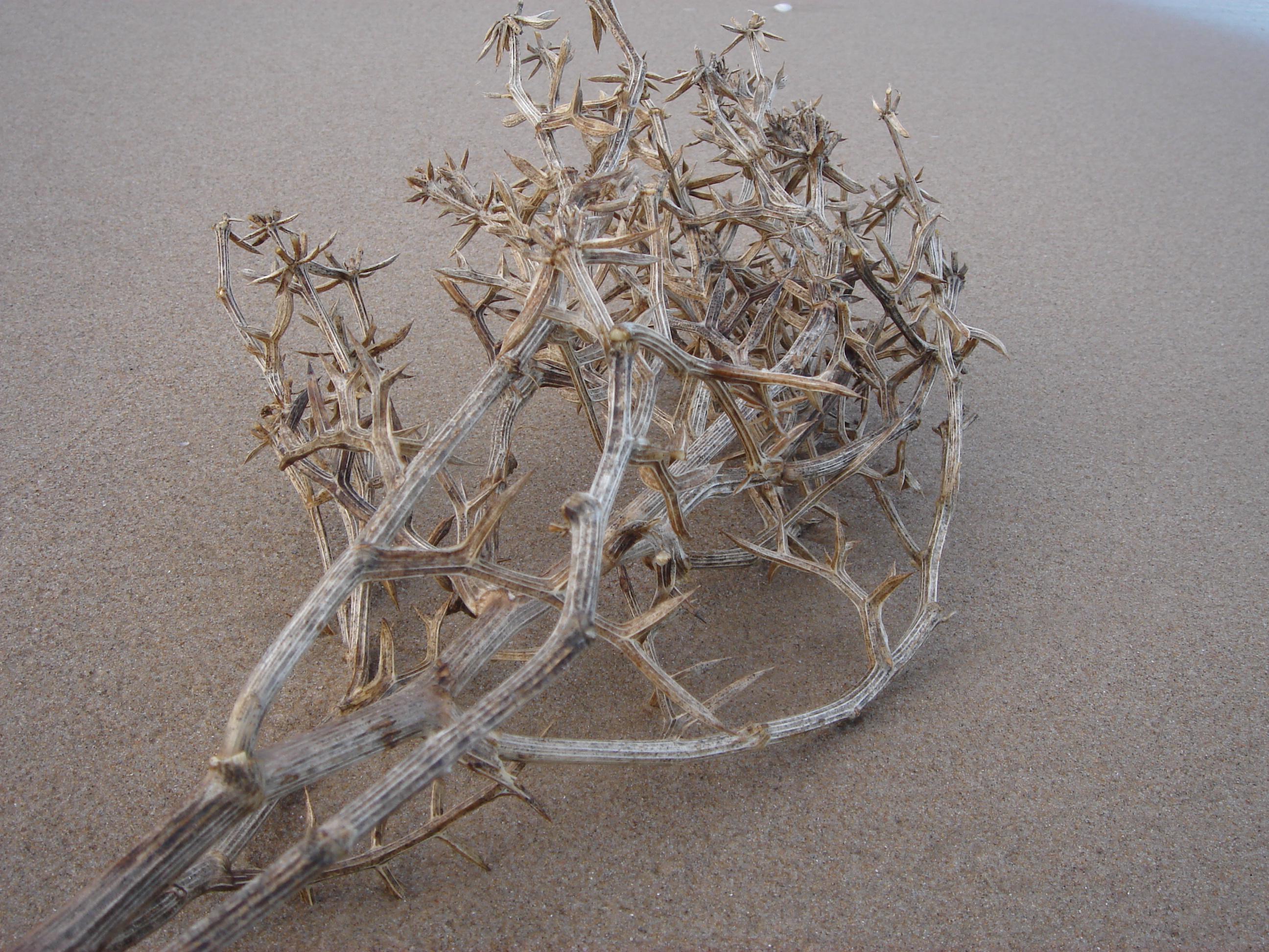 Foto playa Bega de Mar. [ n_lorito ]  Naturaleza muerta sobre la arena. Playa Mareny Blau. Sueca