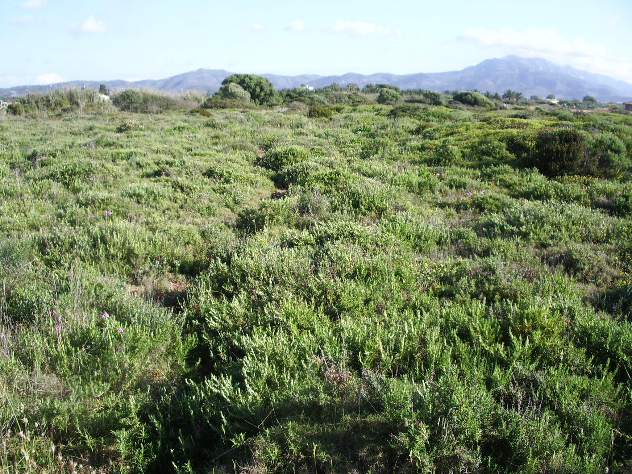 Foto playa Les Deveses. Mar verde
