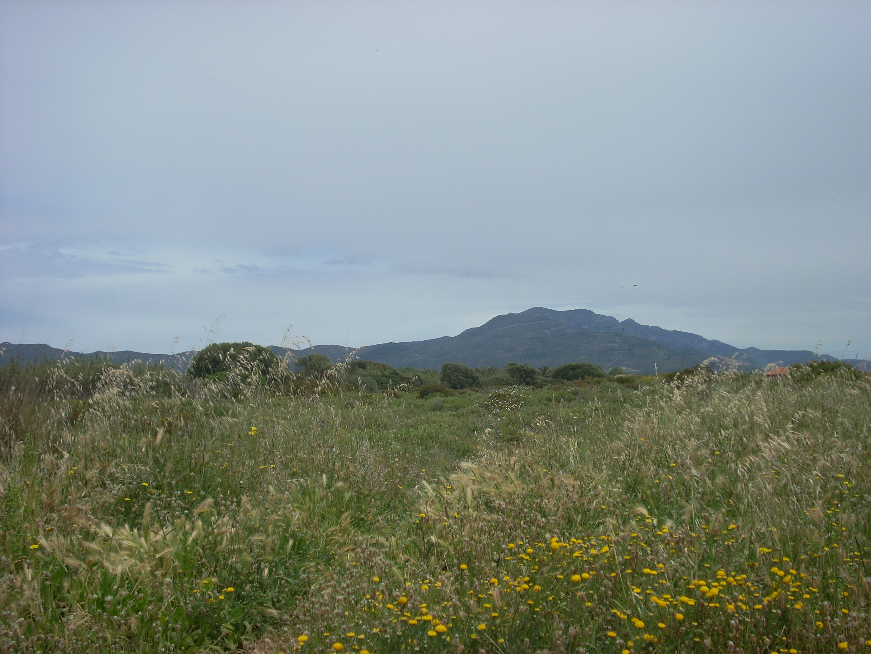 Foto playa Les Deveses. El Montsià (1-5-09)