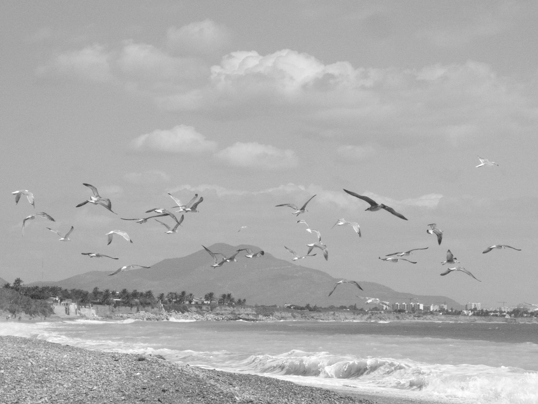 Foto playa Mar Xica. Mar Xica Beach - Benicarló