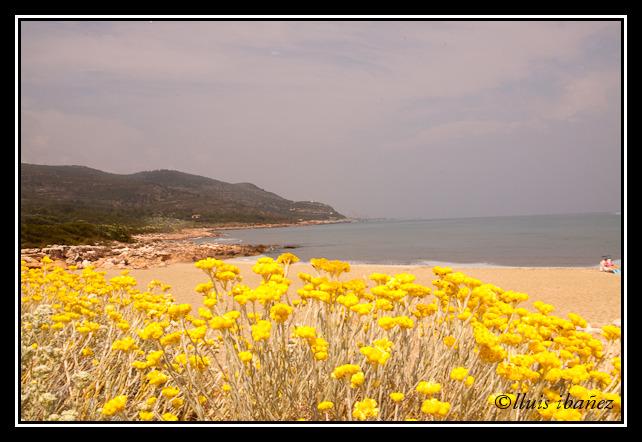 Foto playa Cala L´Aljub. Platja del Pebret