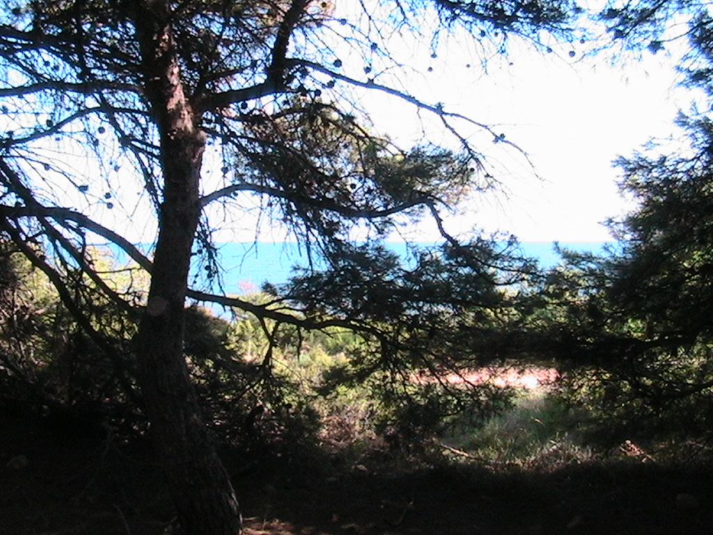 Foto playa Portonegro. PINAR   IRTA