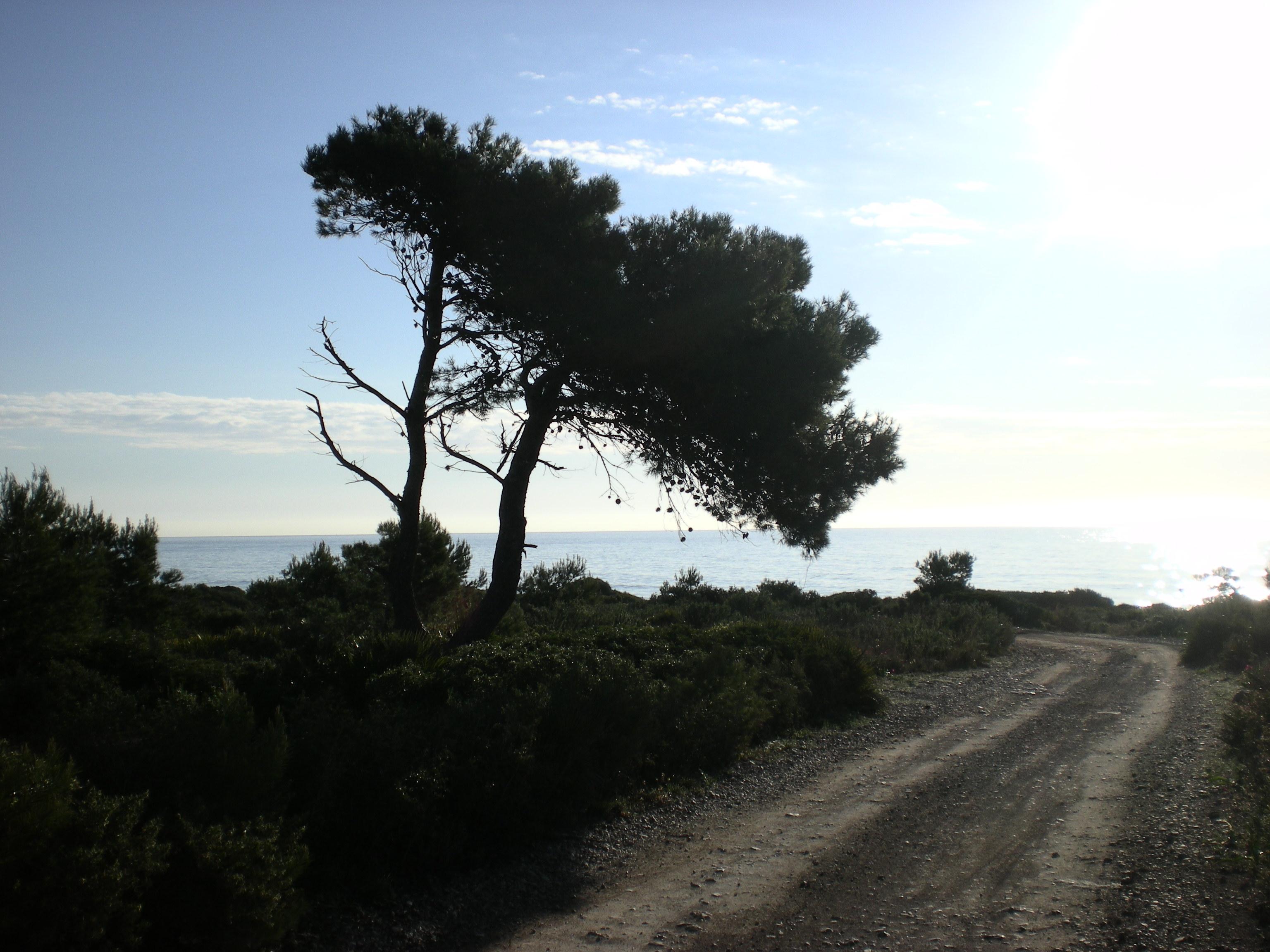 Foto playa Portonegro. Camino - Sierra de Irta