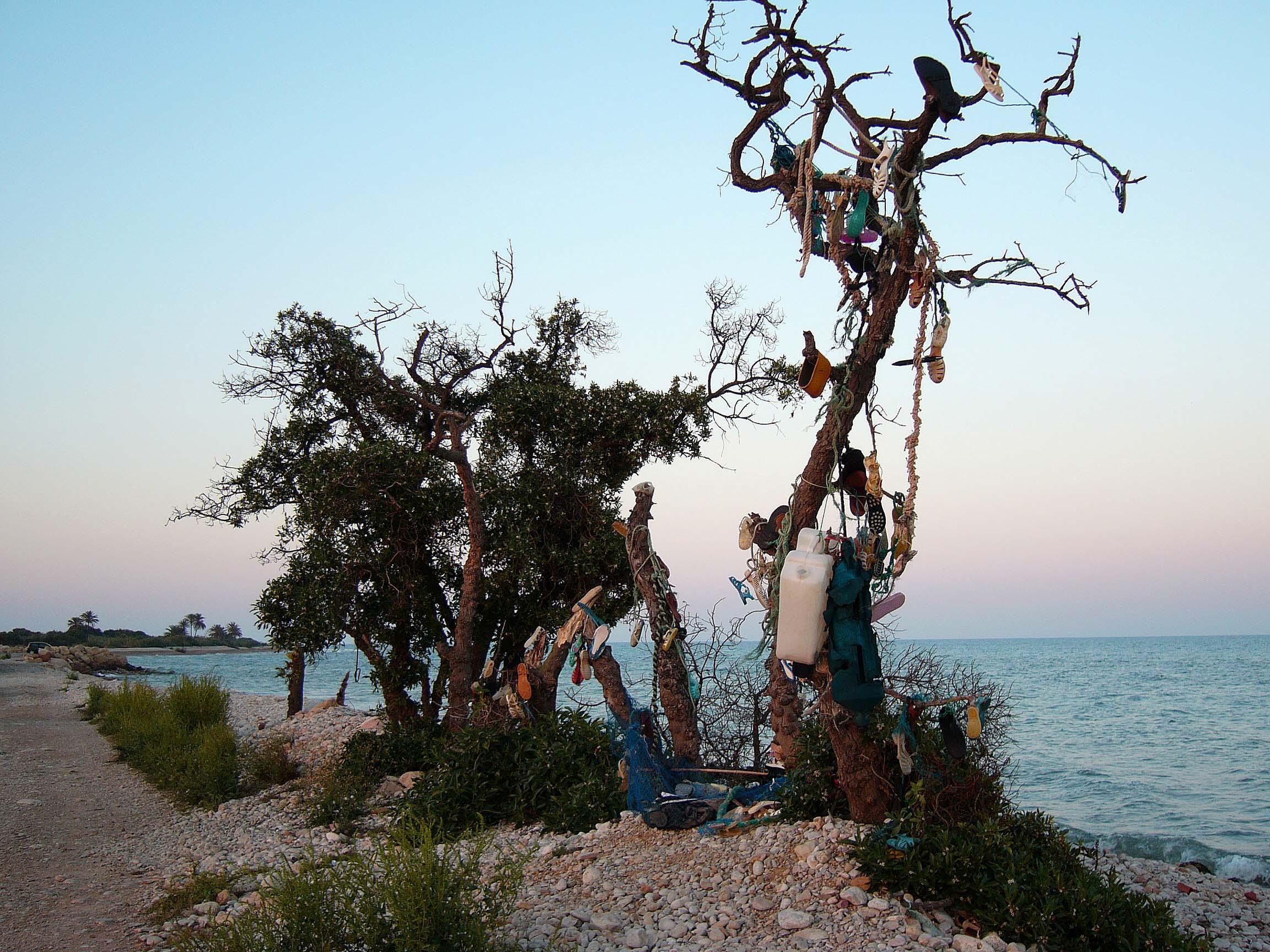 Foto playa Serradal. Arbol de las chanclas