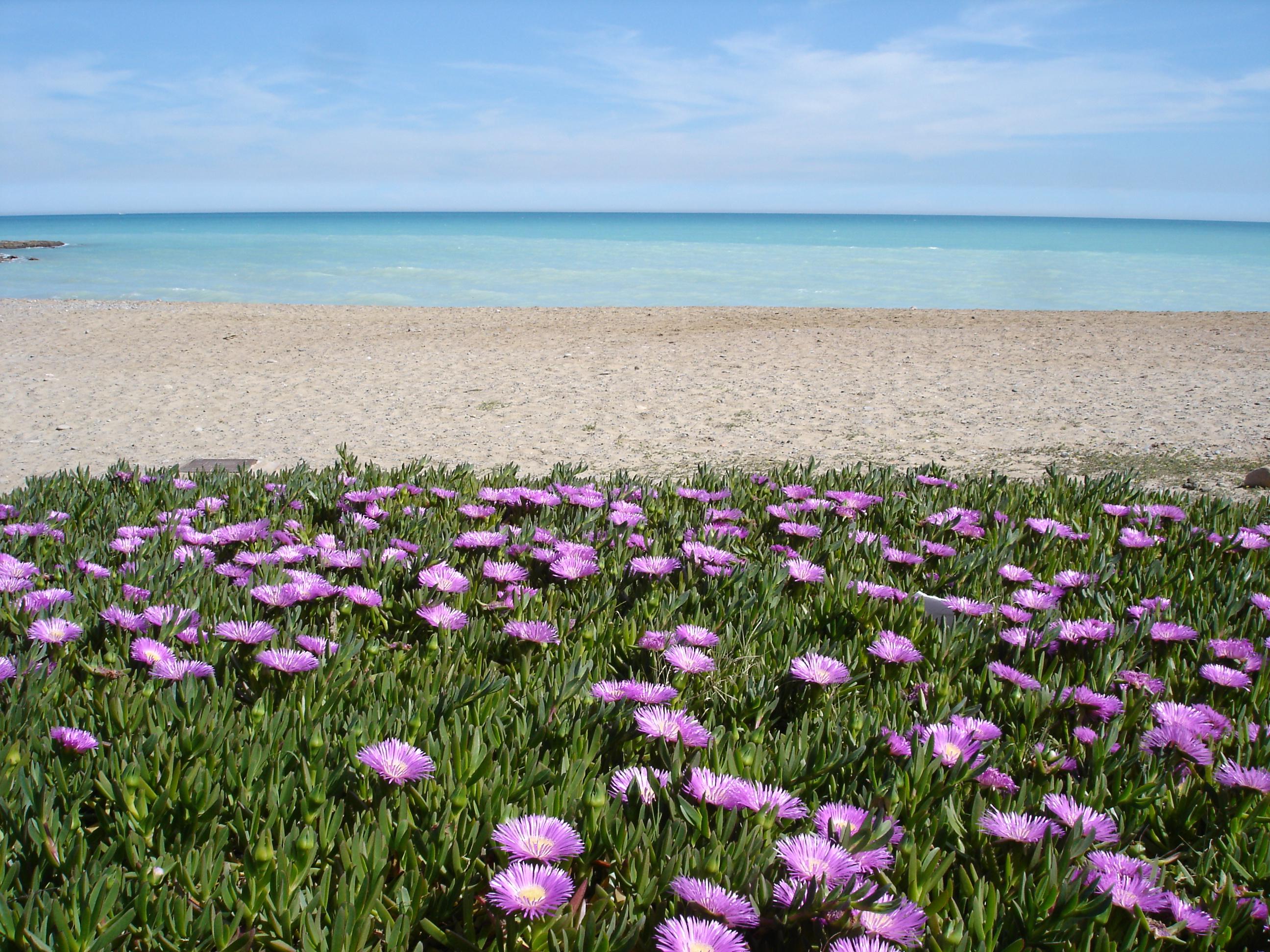 Foto playa Beniesma. Moncofar