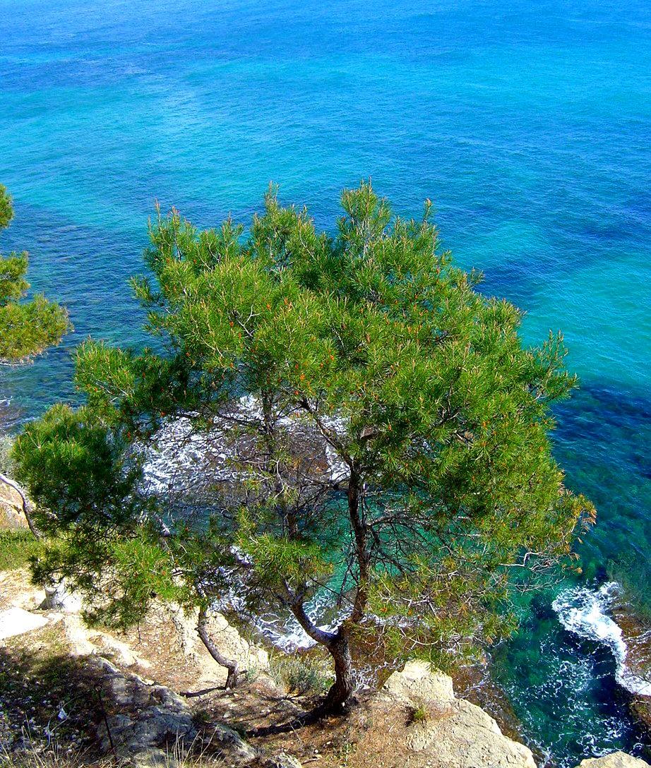 Foto playa Els Pinets. Nr Calpe