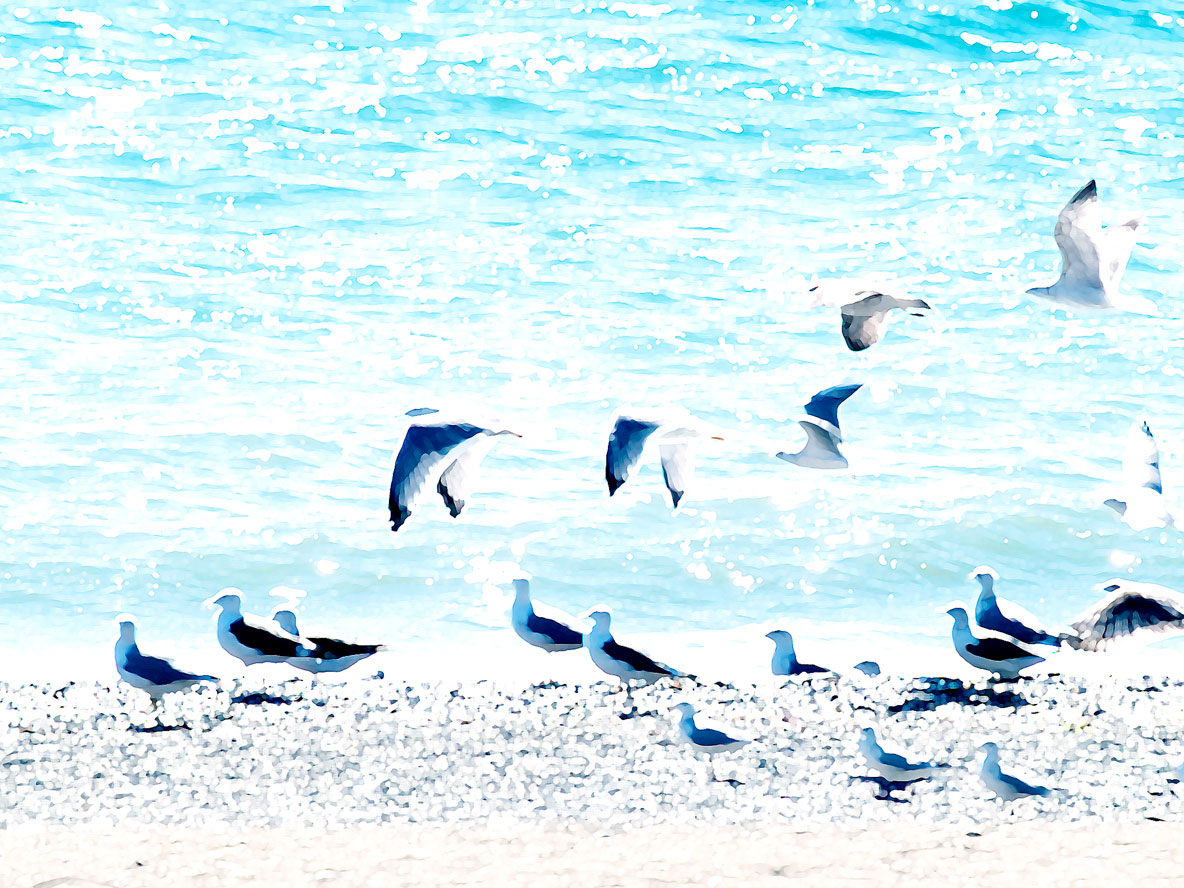 Foto playa Guadalmansa / El Pirata. Seagulls at Guadalmansa Beach