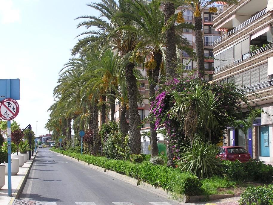 Foto playa El Acequión. Paseo Vistalegre
