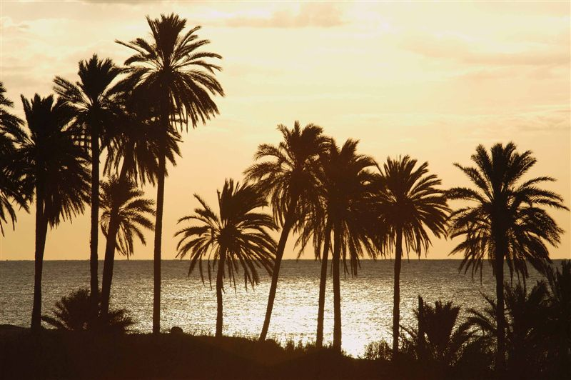 Foto playa Cala de las Piteras. Amanecer, Torrevieja © (Foto_Seb)