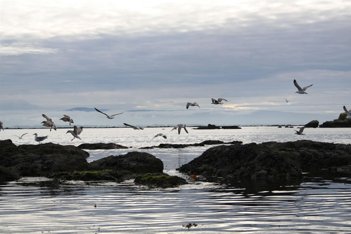 Foto playa O Baluarte / O Casqueiro. gaivotas na Corna