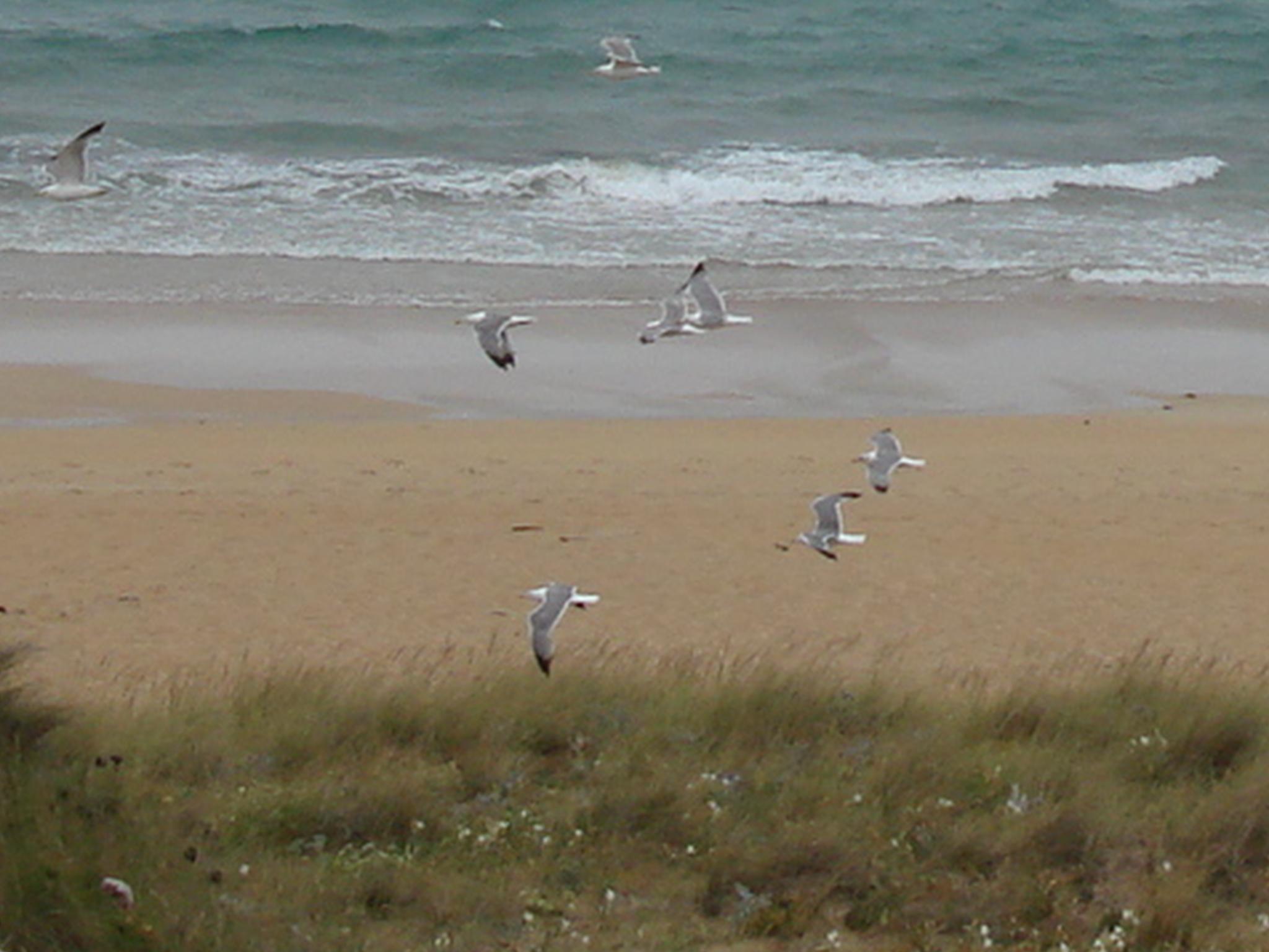 Playa Lagoa de Vixan / Anguieiro / Anguieira