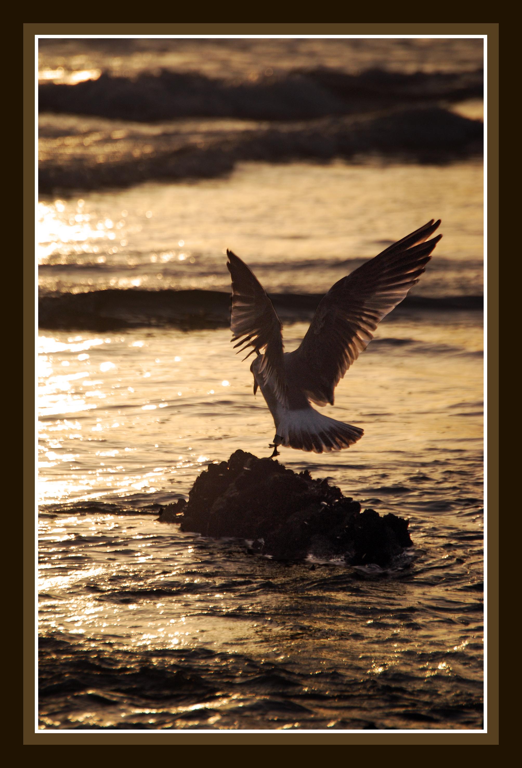 Foto playa A Ladeira / Las Dunas. playa de corrubedo 1
