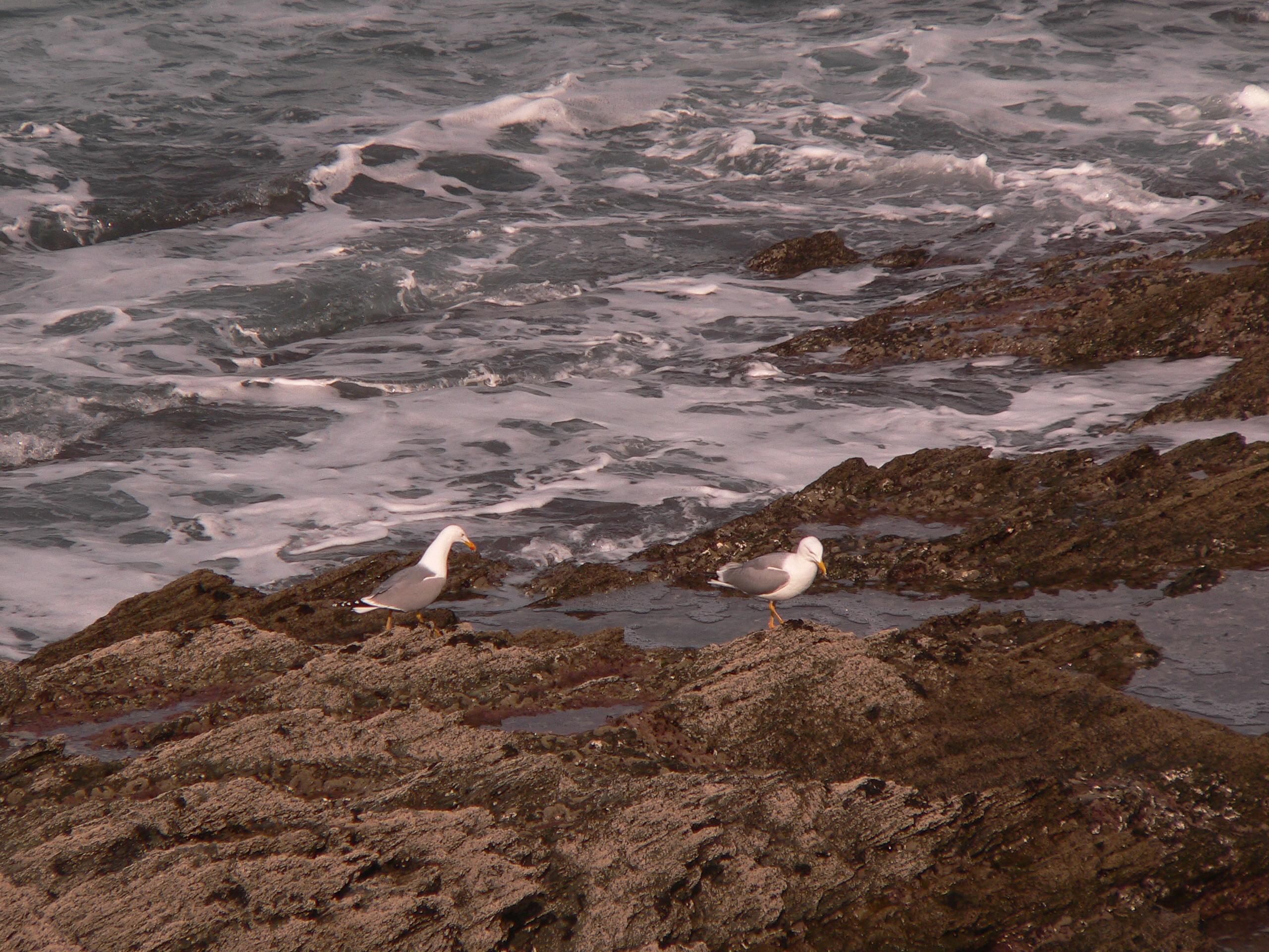Foto playa Salgueiro. Gaviotas sobre las rocas