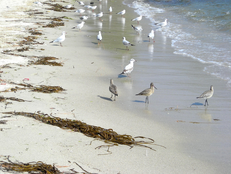 Foto playa Liñares. birulicos na praia de bornalle