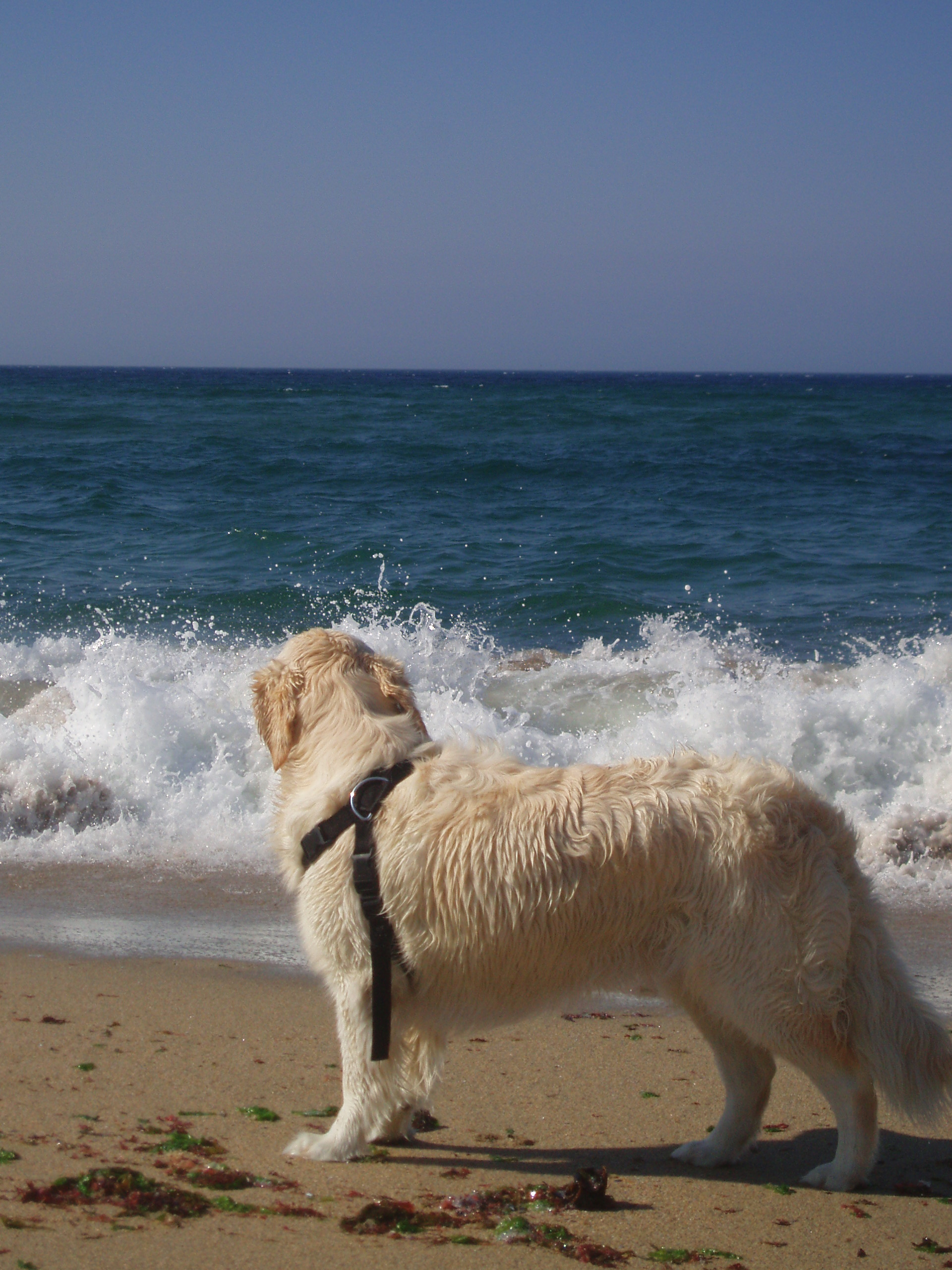 Foto playa Arnela. Loli na Arnela