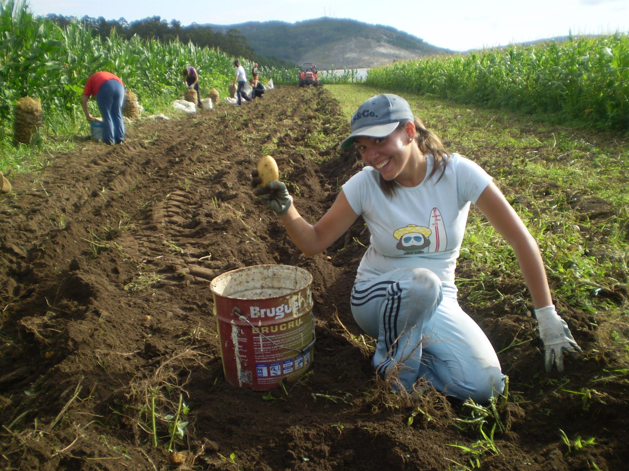 Foto playa As Maseiras. Cosechando patatas (Candoas)