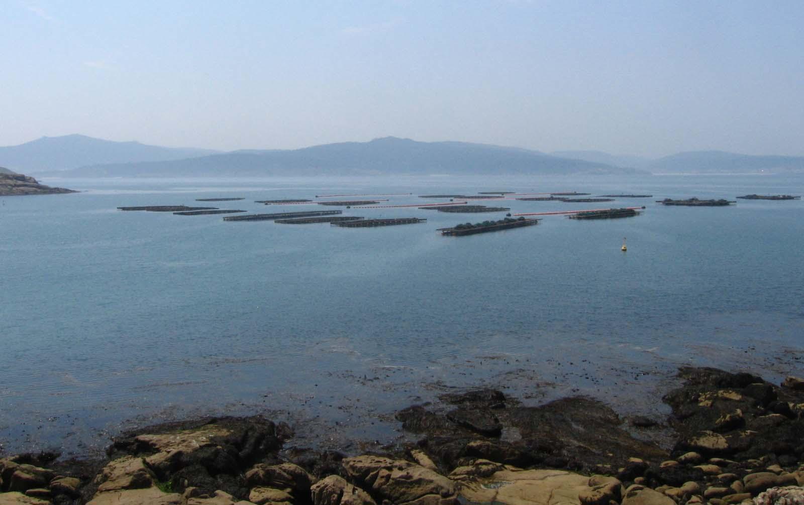 Playa O Osmo