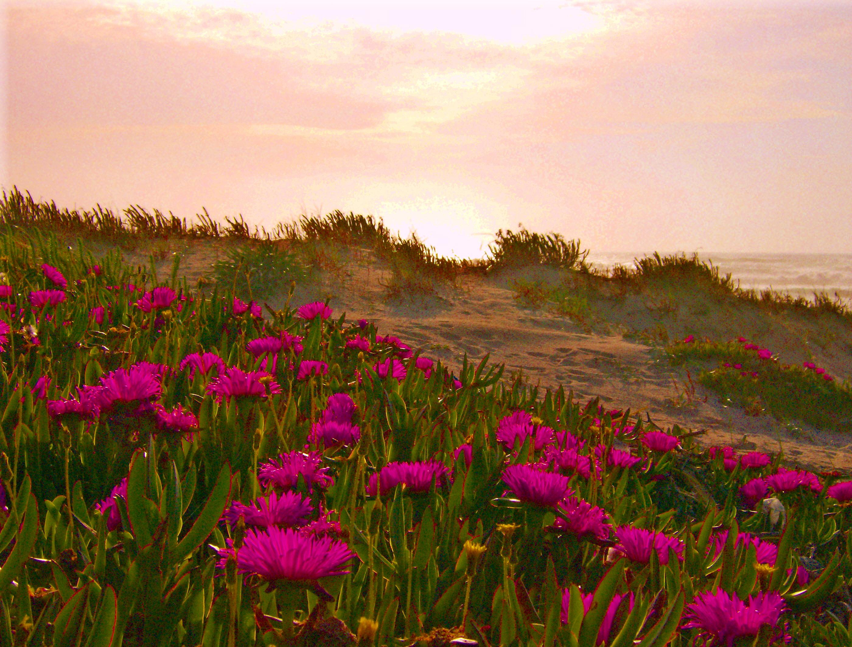 Foto playa Sabón / Alba. Dunas de color rosa/Rosen dunes