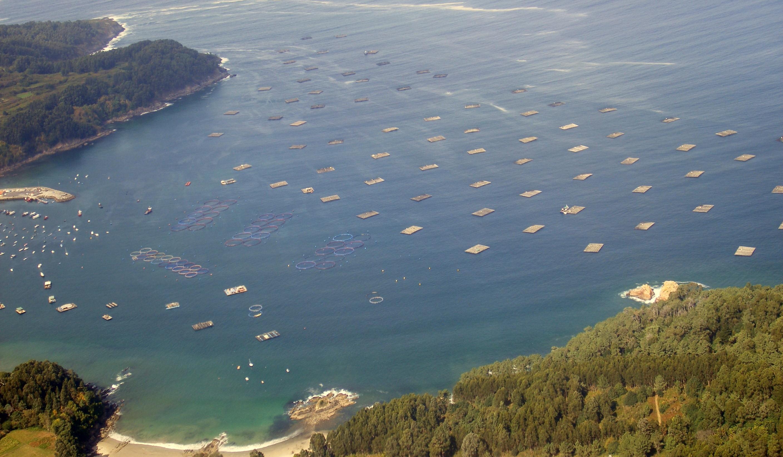 Foto playa San Pedro. The mussel farm of Lorbé (A Coruña-Galician)