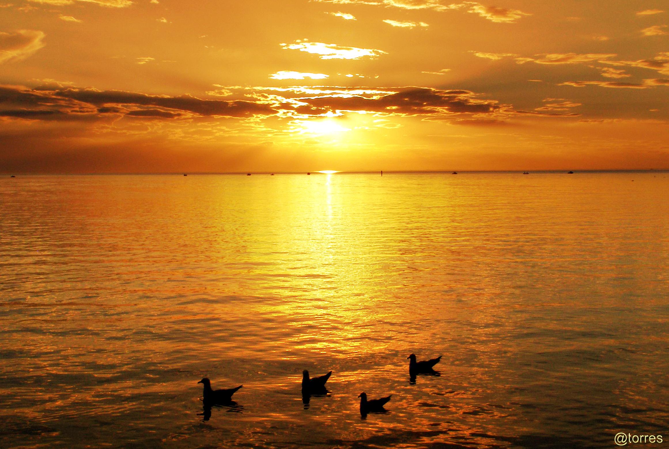 Foto playa Grande de Miño. Ocaso con gaviotas.