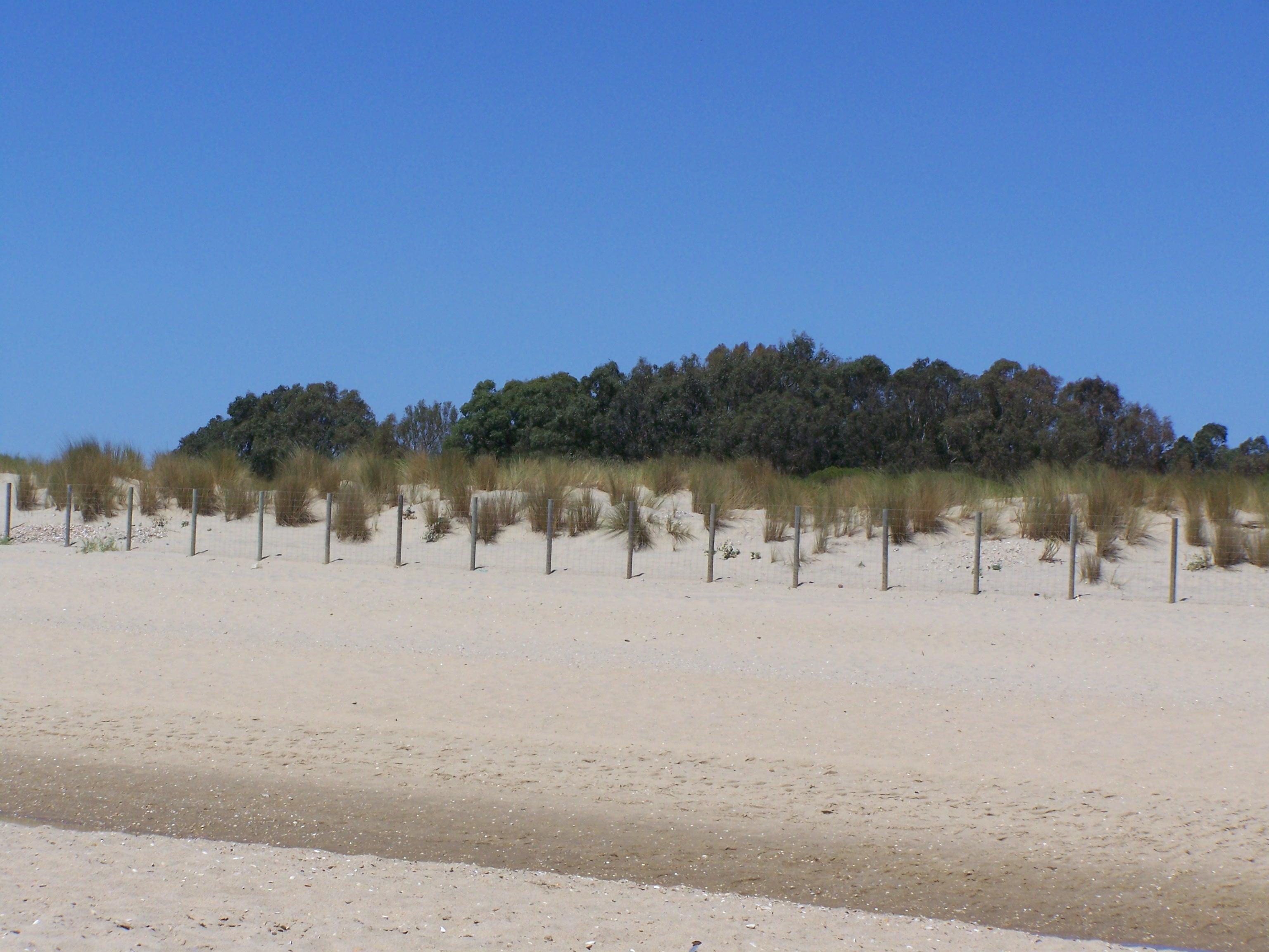 Foto playa Del Hoyo. Dunas de Isla cristina