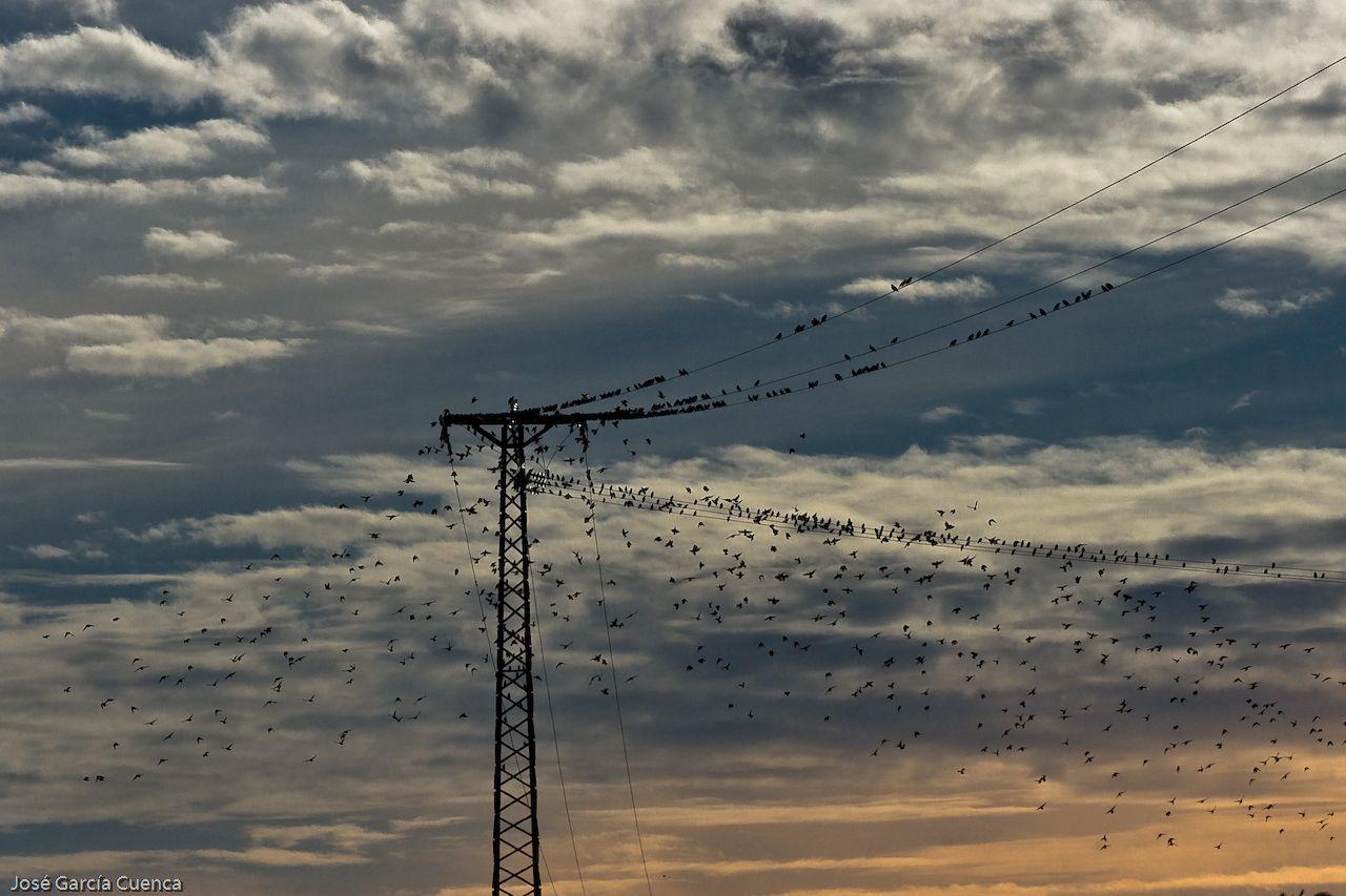 Foto playa Río Tamuxe. Pájaros a orillas del Miño