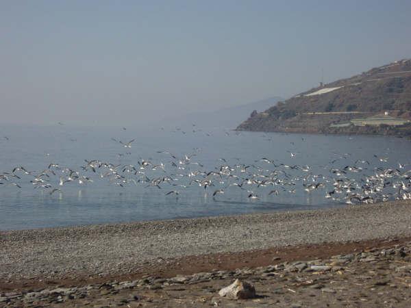 Foto playa El Ruso. Desbandada