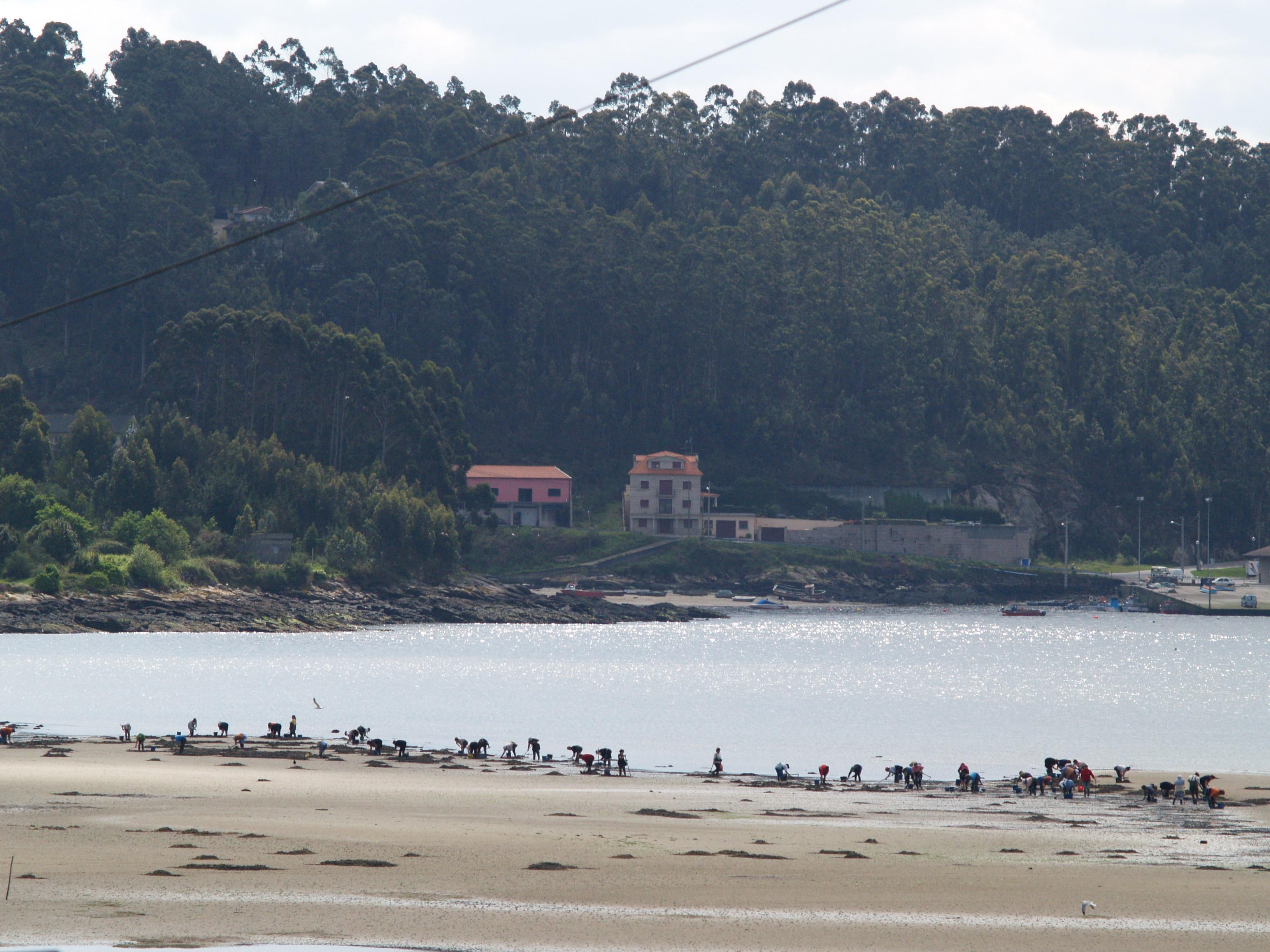 Foto playa San Martiño. Mariscando en Poio